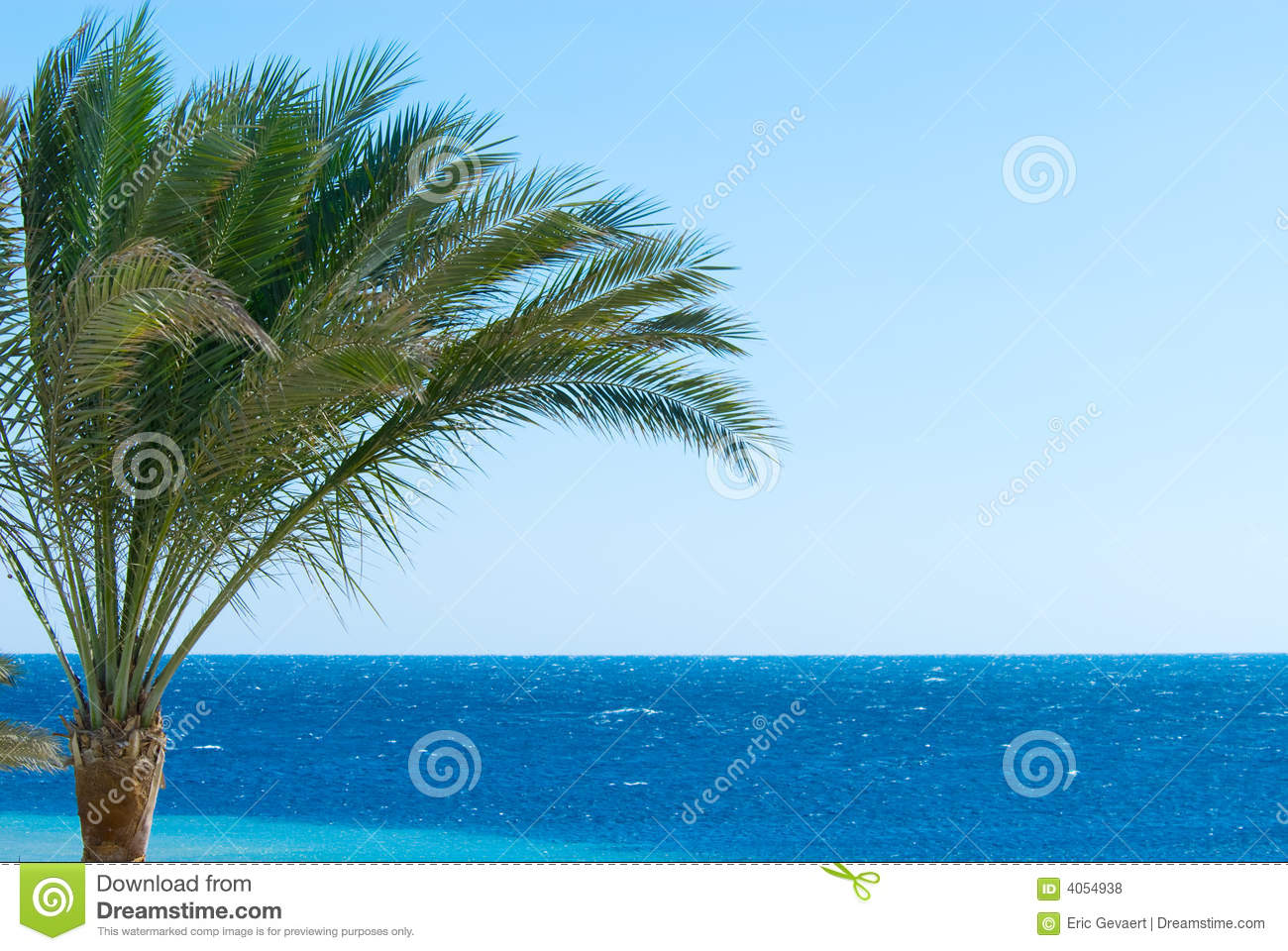Palm Tree And Ocean Royalty Free Stock Photos - Image: 4054938