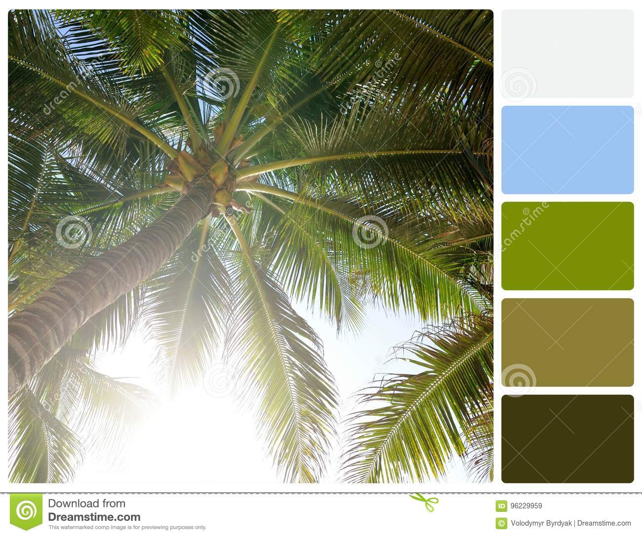 Palm Tree With Palette Color Swatches Stock Image - Image of group ...