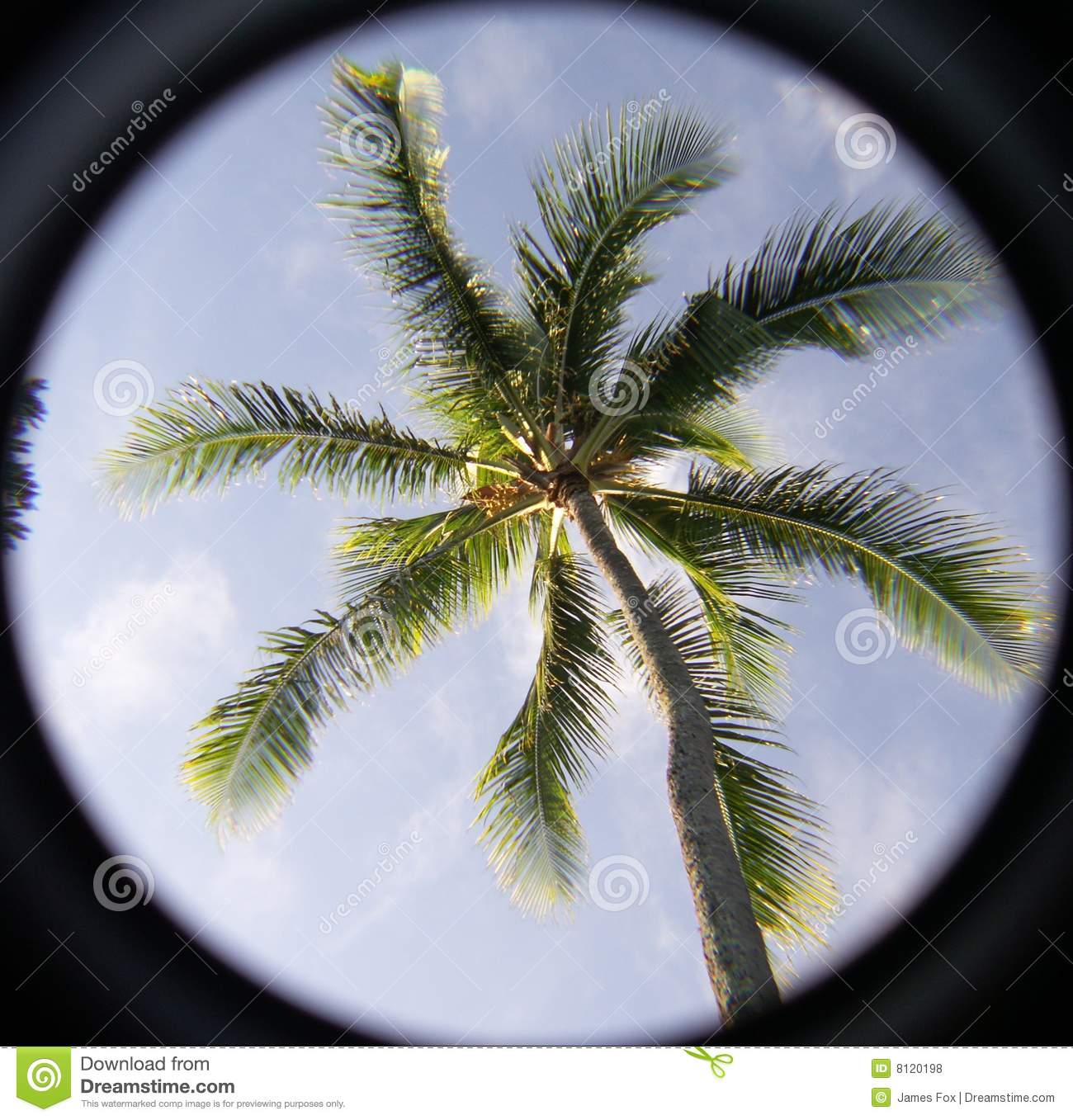 Palm Tree Pardise
