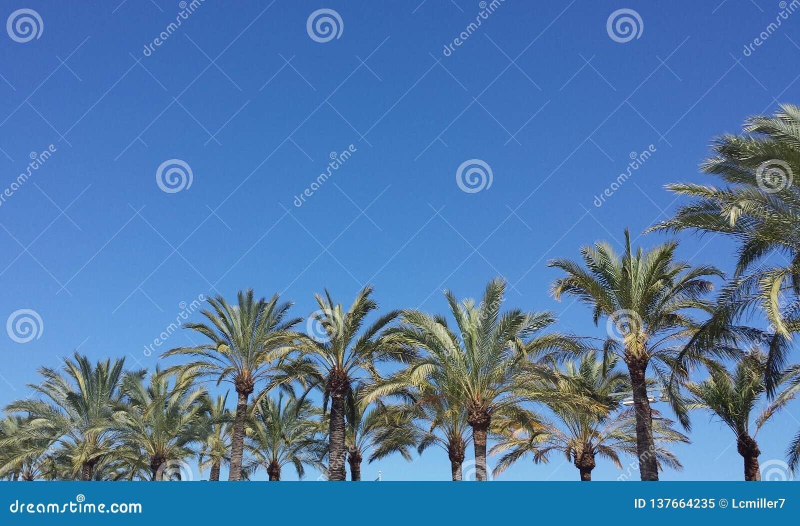 Palm Tree Promenade Mediterranean Blue Cloudless Sky Sky