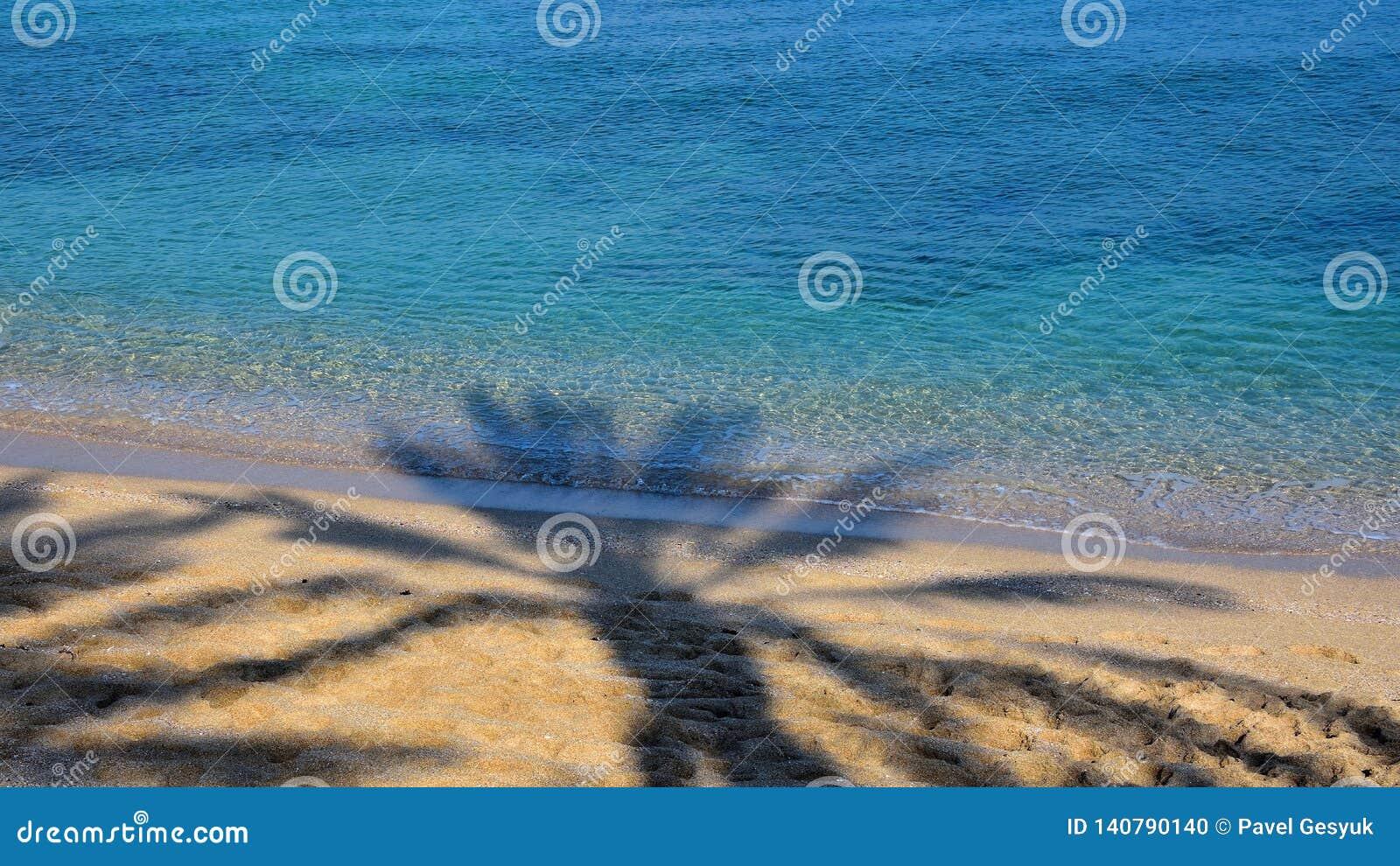 Palm tree`s shadow on sandy beach