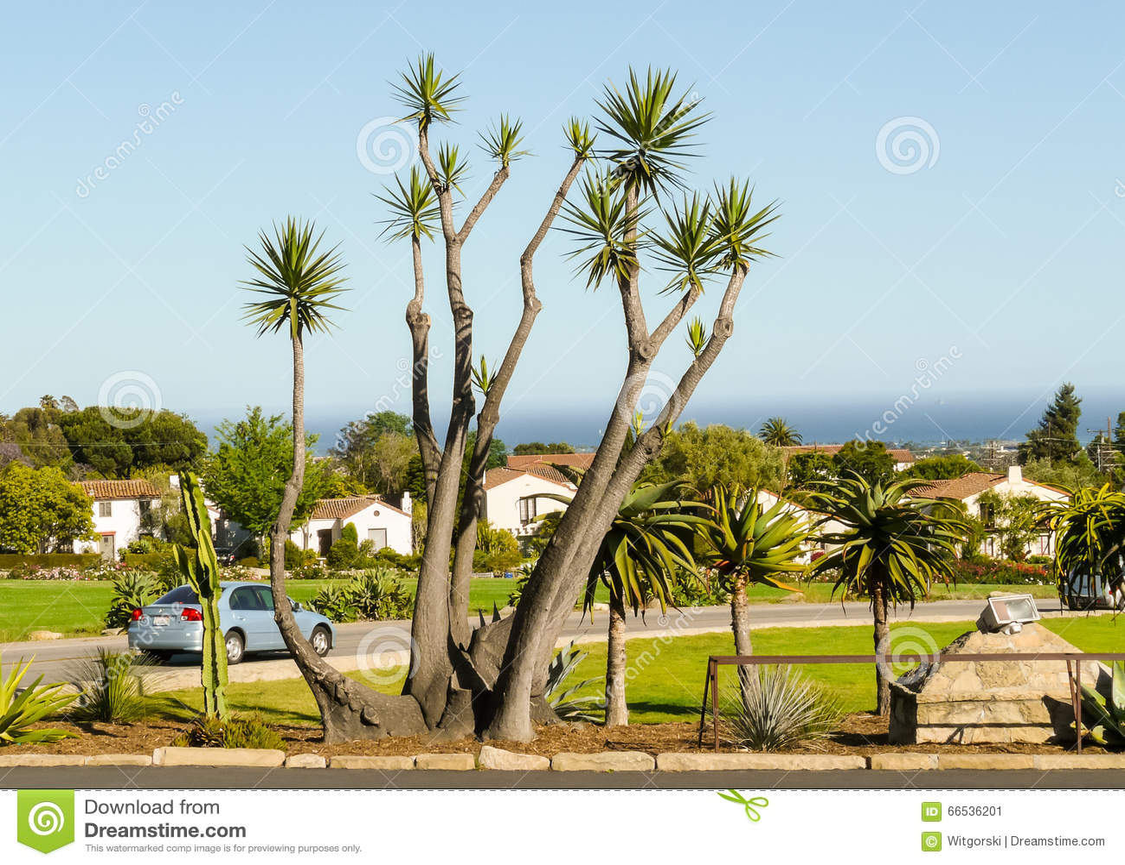 Palm Tree In Santa Barbara Editorial Photo