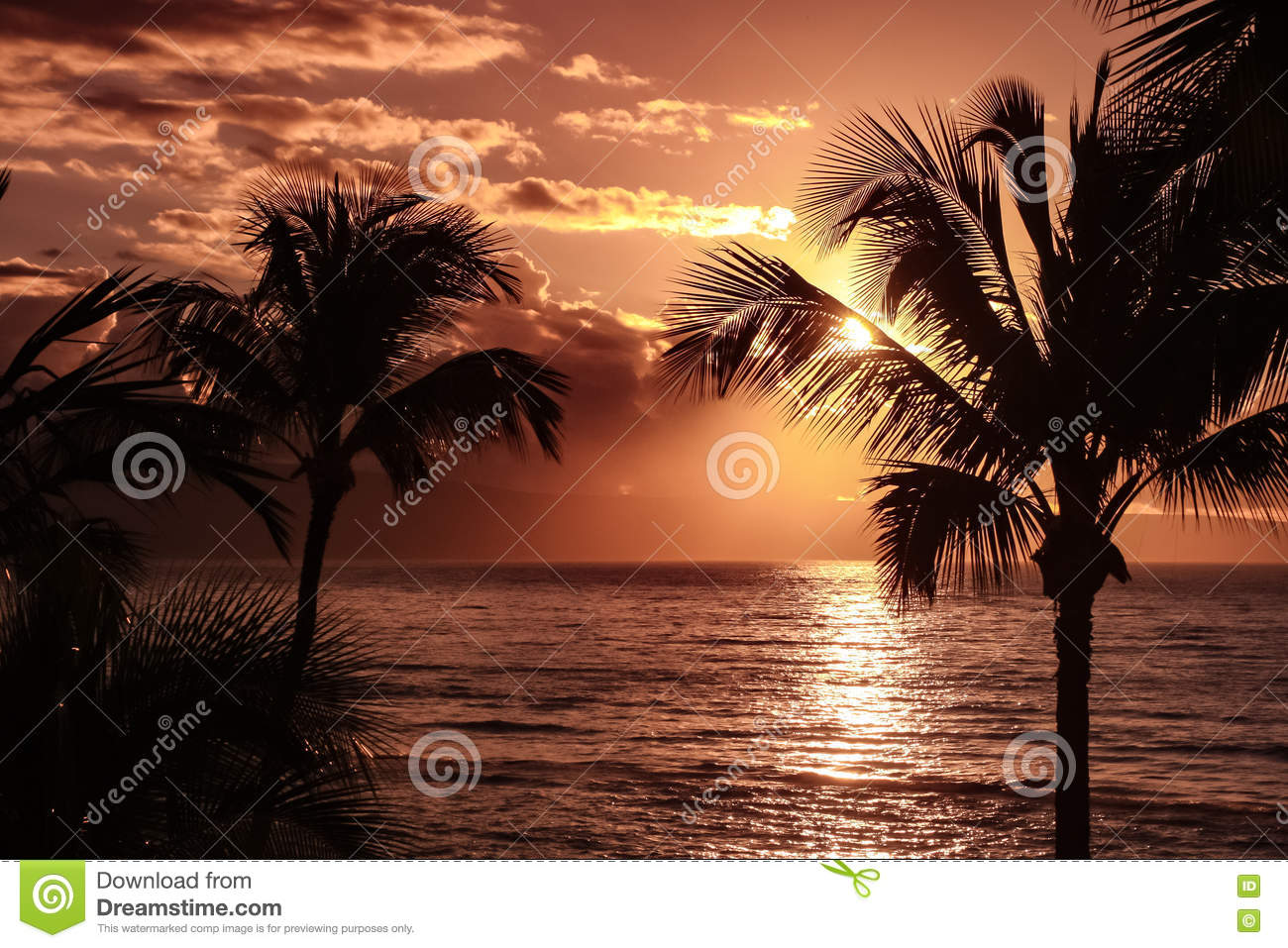 Palm tree silhouette against yellow sunset sky - hawaii