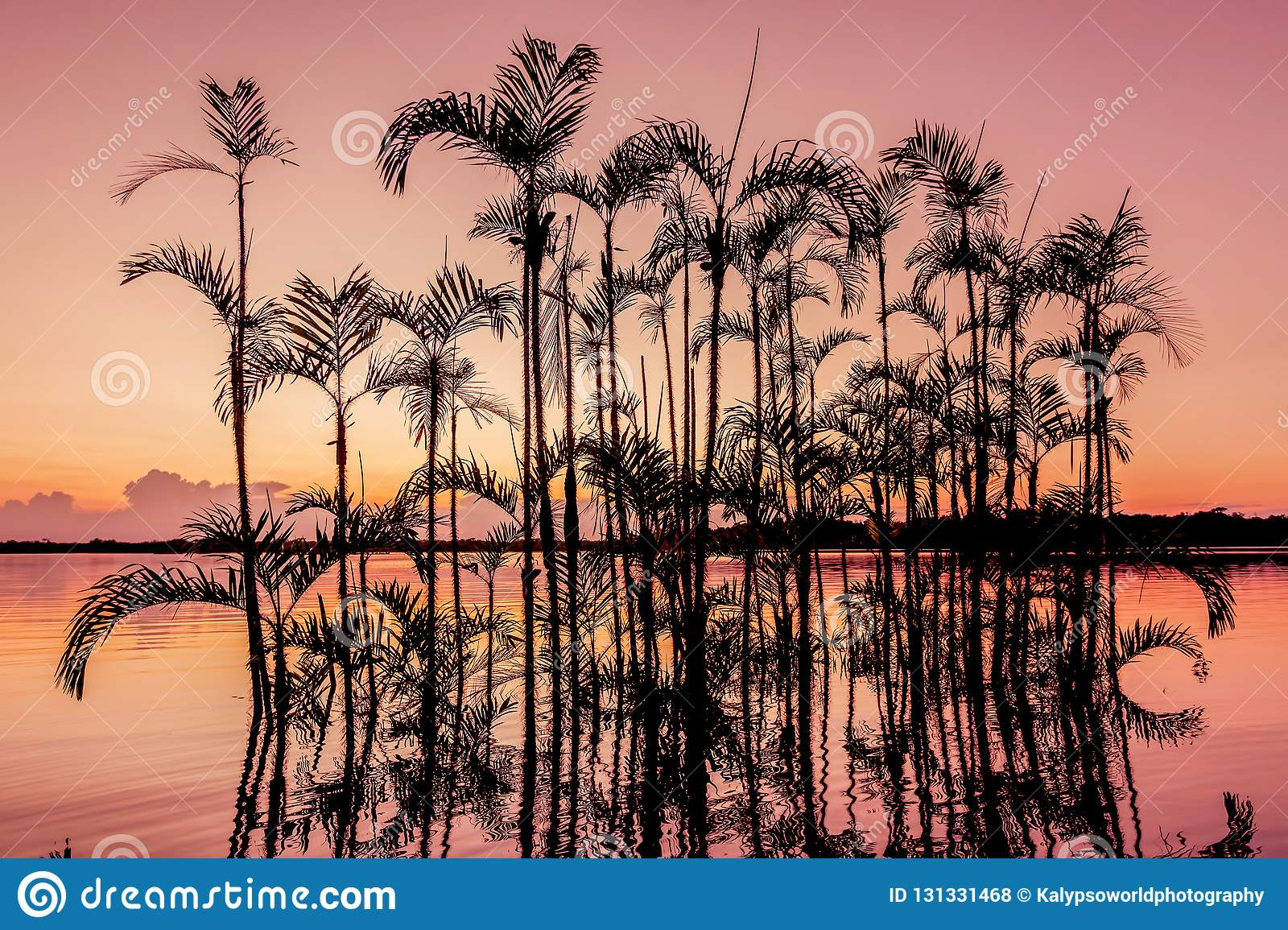 Palm Tree Silhouetted in the orange sunset, Amazonian Jungle