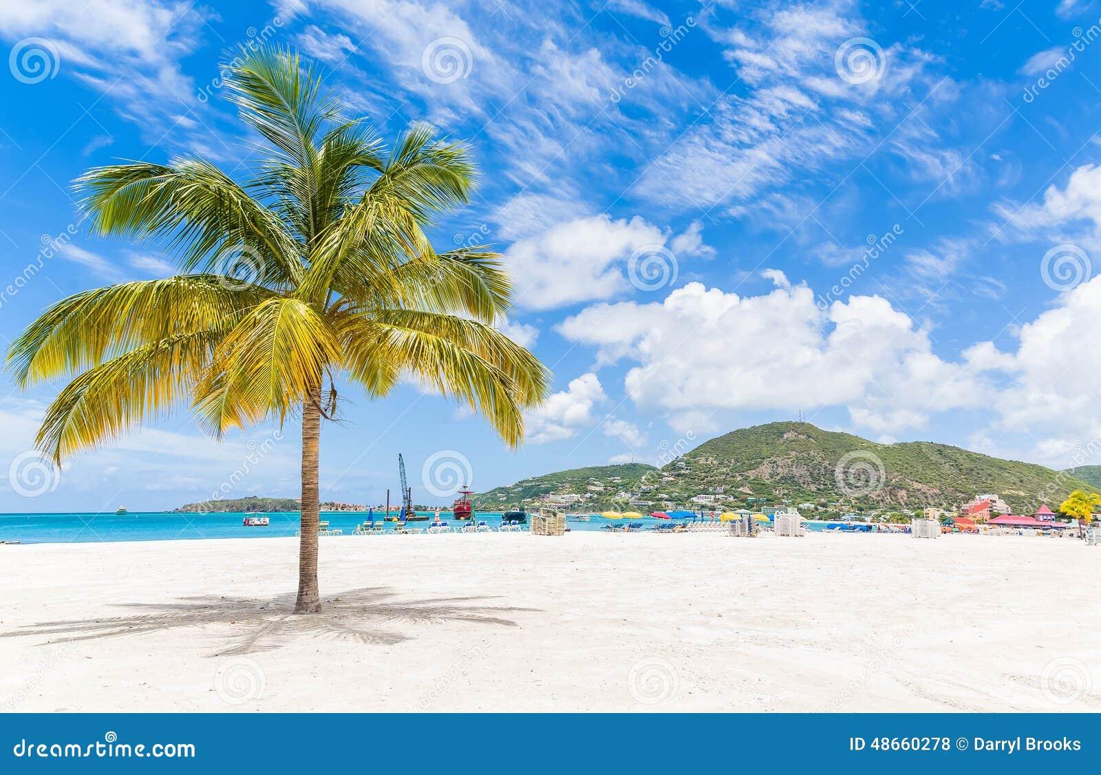 Palm Tree on St Martin Beach