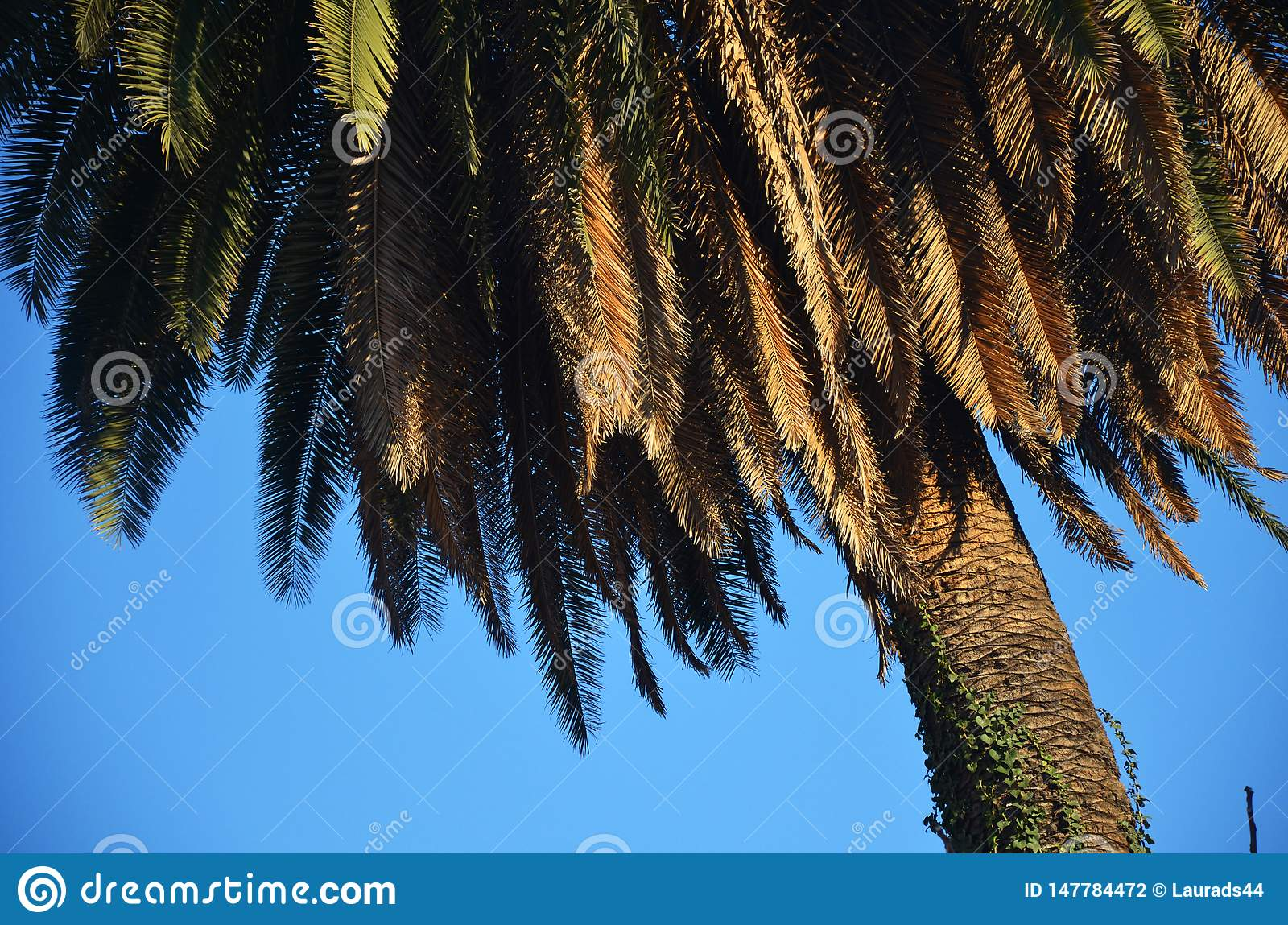 Palm tree in a summer day