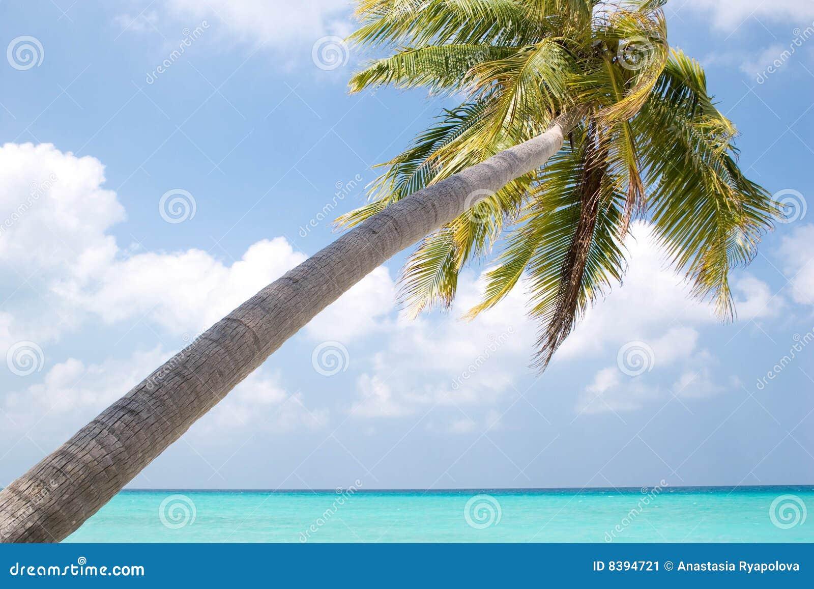 Palm tree at sunny day