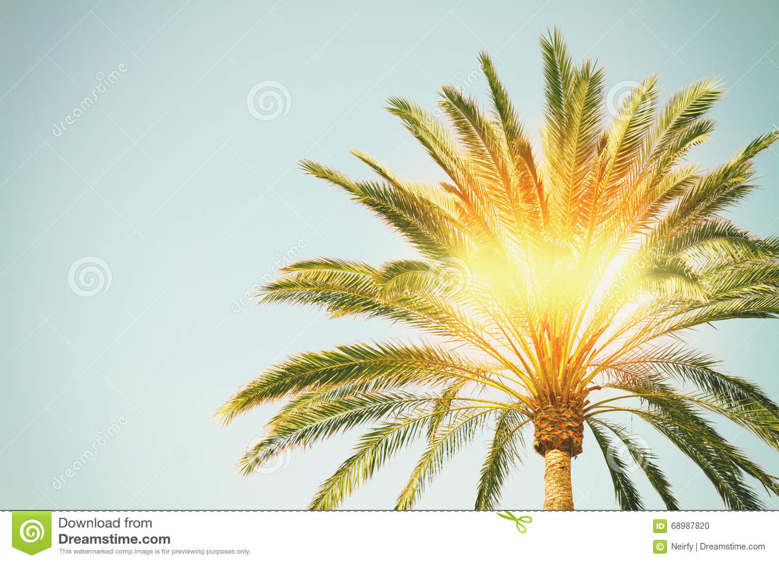 Palm tree with sunshine