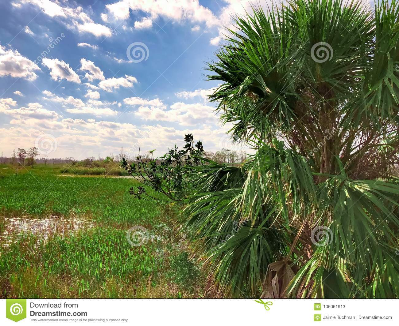 Palm tree in swamp