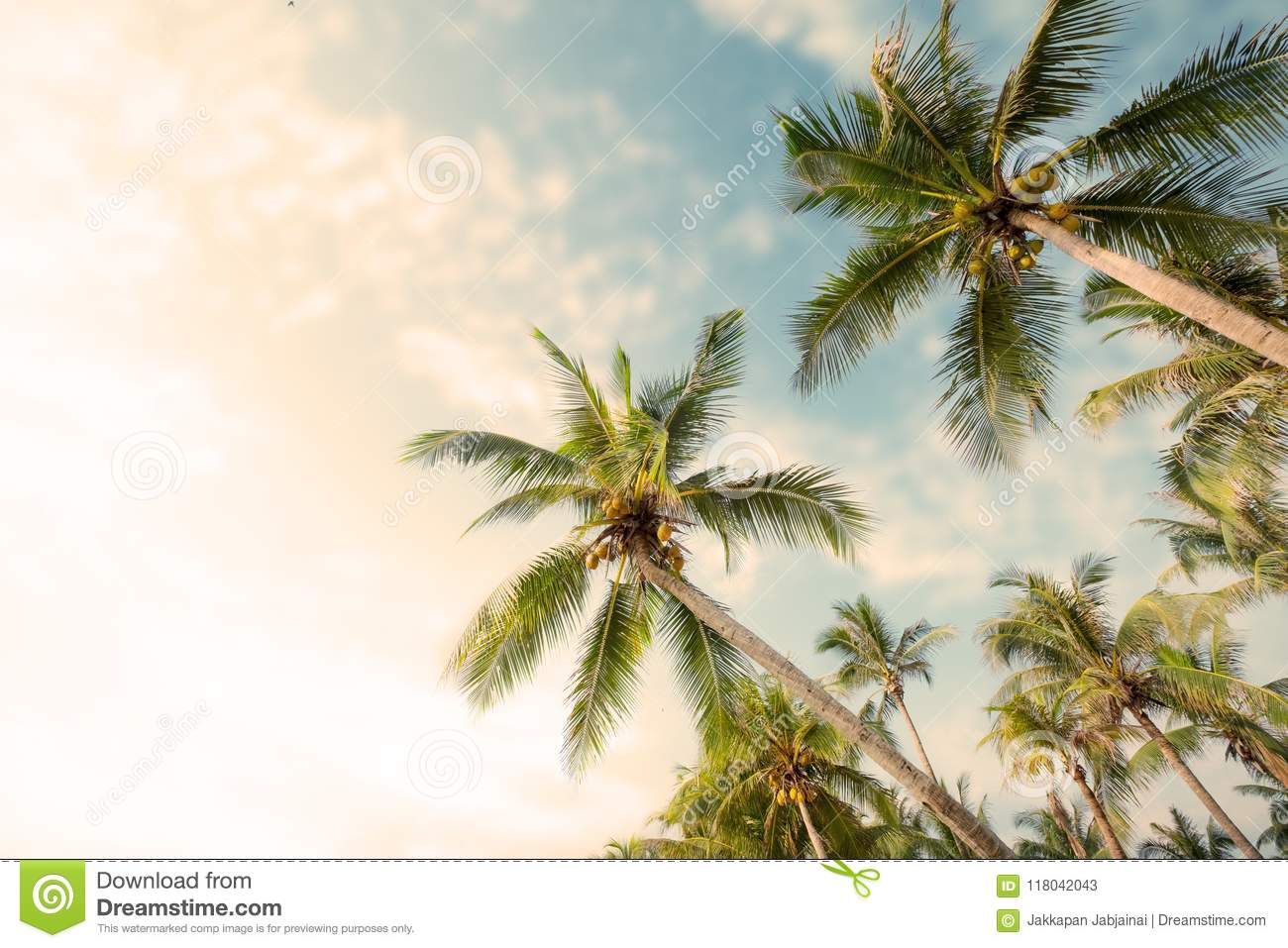 Palm Tree On Tropical Beach With Blue Sky And Sunlight Stock Image