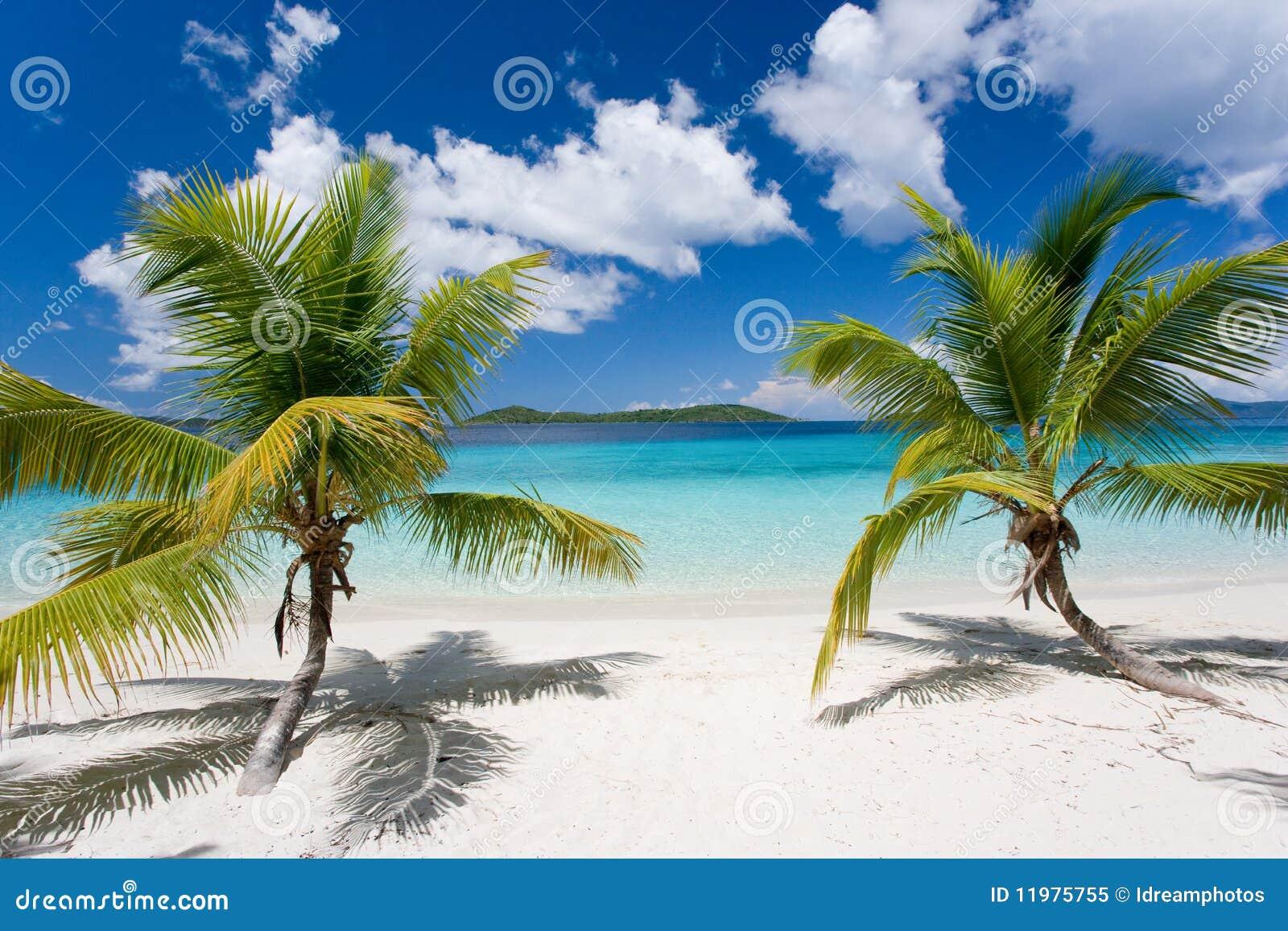 palm tree tropical island beach royalty free stock photo image 11975755. Black Bedroom Furniture Sets. Home Design Ideas
