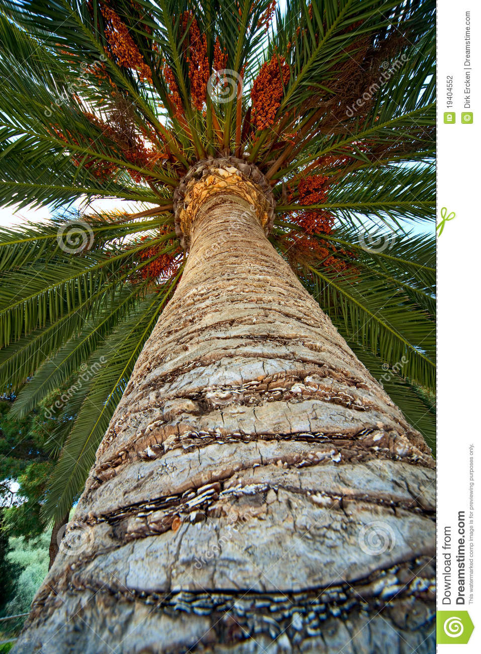 Palm Tree Trunk Bark And Leaf Background Stock Photo