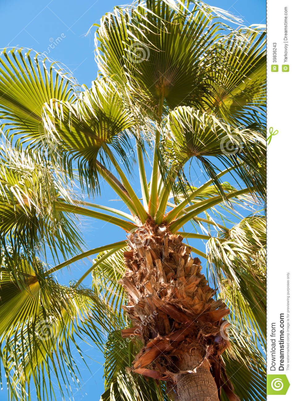 palm tree krone branches - photo #16