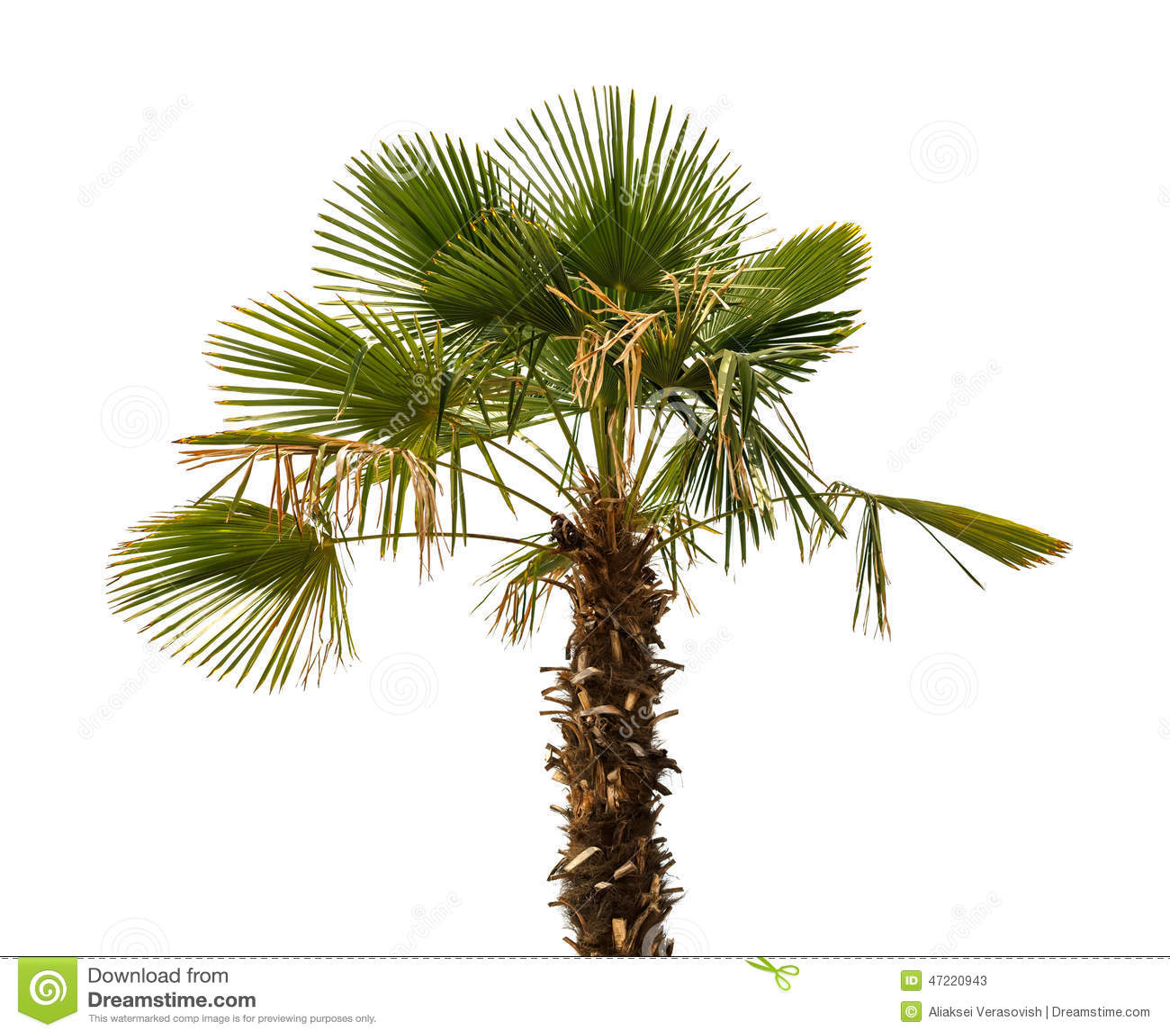 palm tree white - photo #6