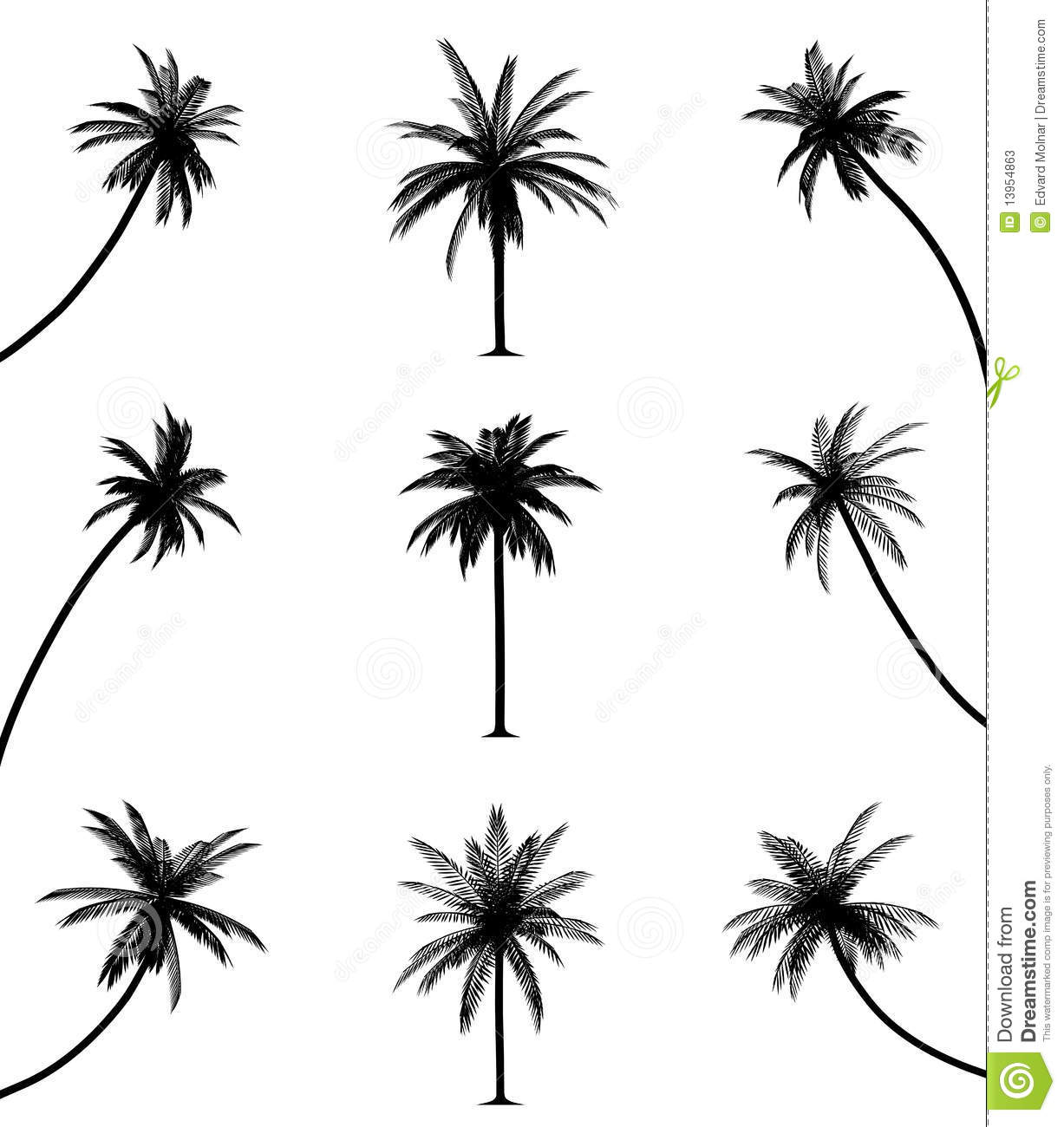 Palm Trees Stock Photos - Image: 13954863 - photo#36