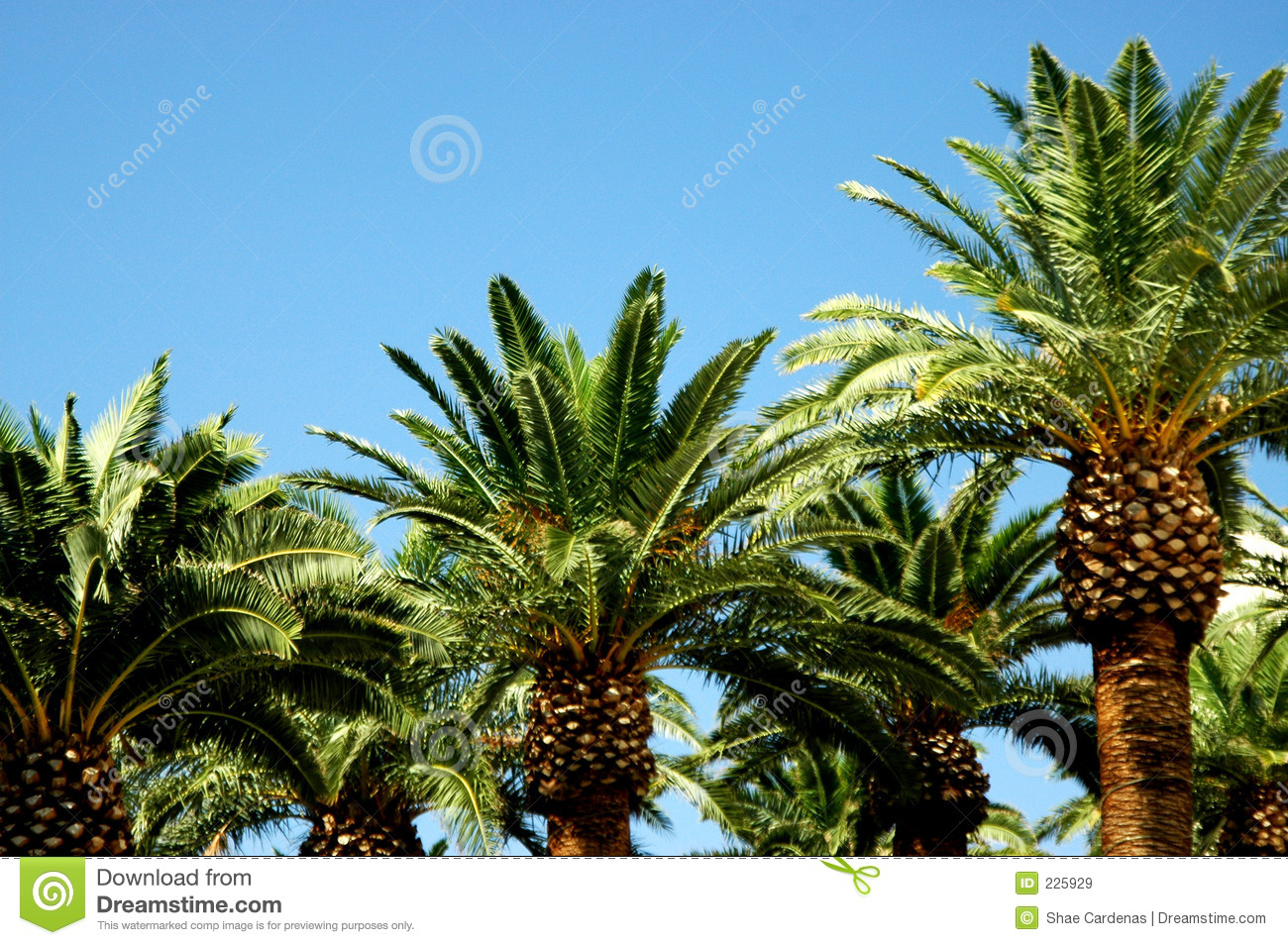 Download Palm Trees stock image. Image of tops, area, space, blue - 225929