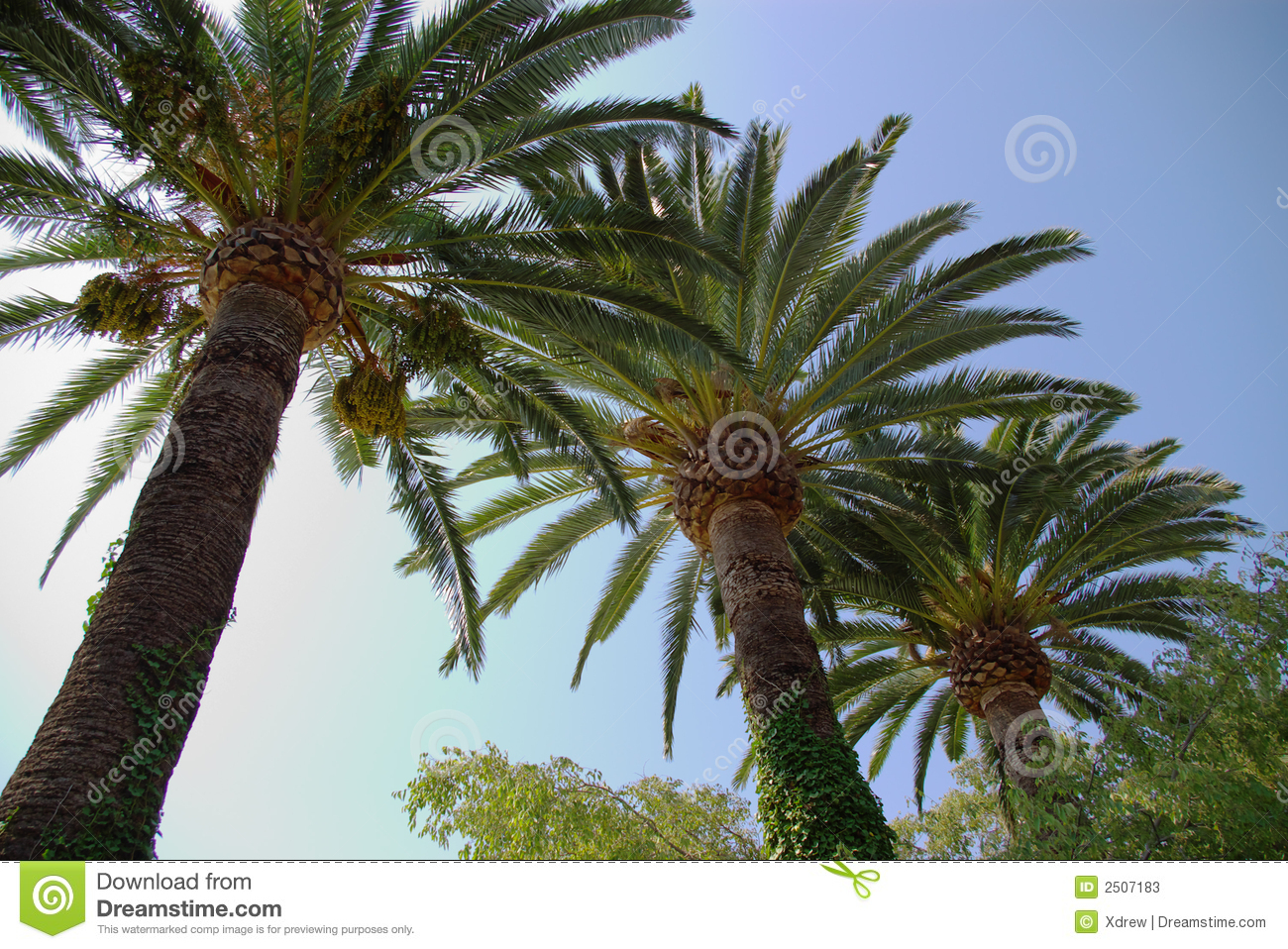 Palm Trees Stock Photos - Image: 2507183