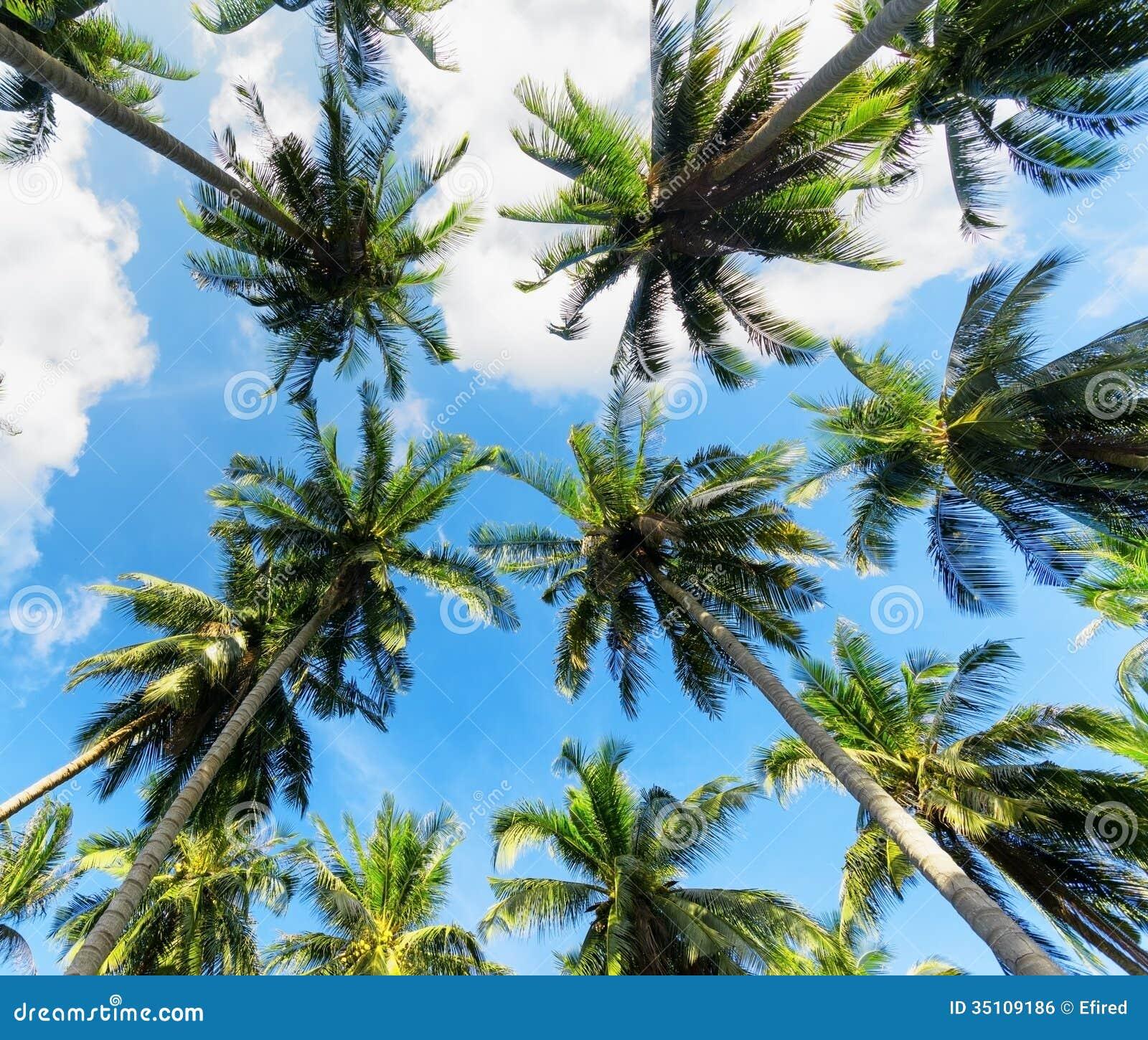 trees palm blue - photo #20