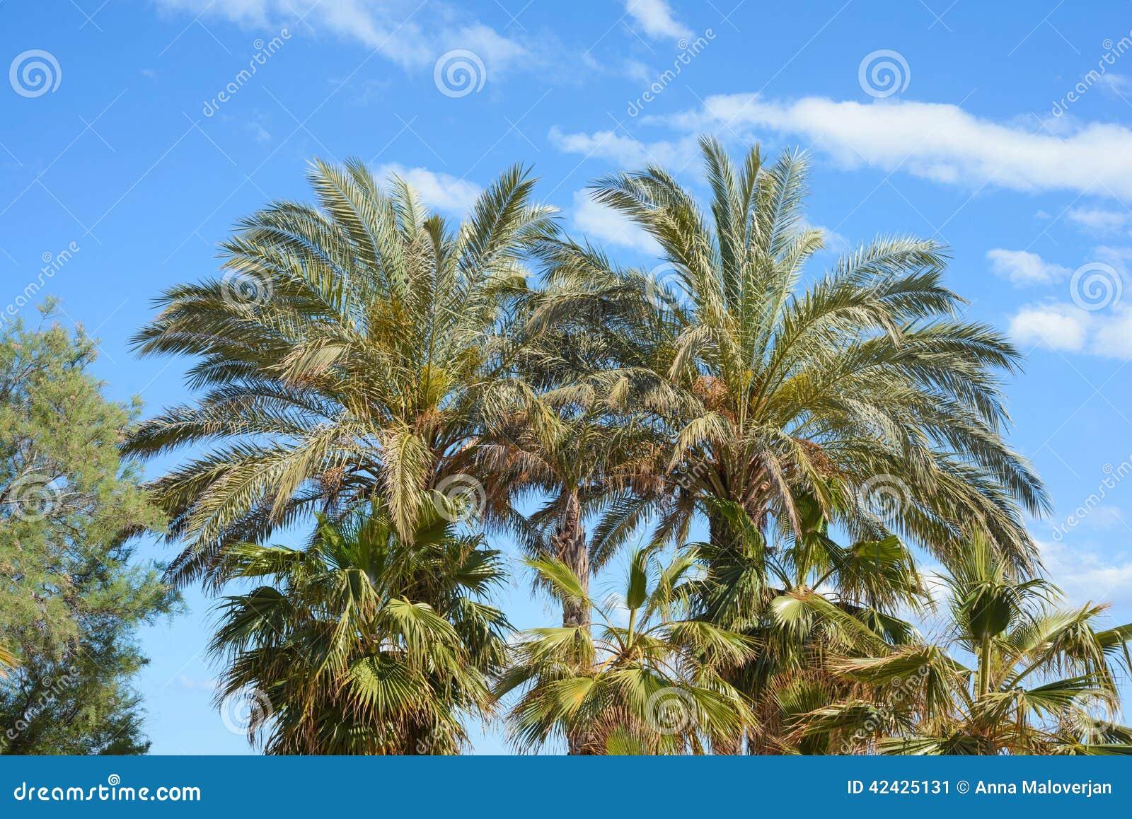 trees palm blue - photo #40