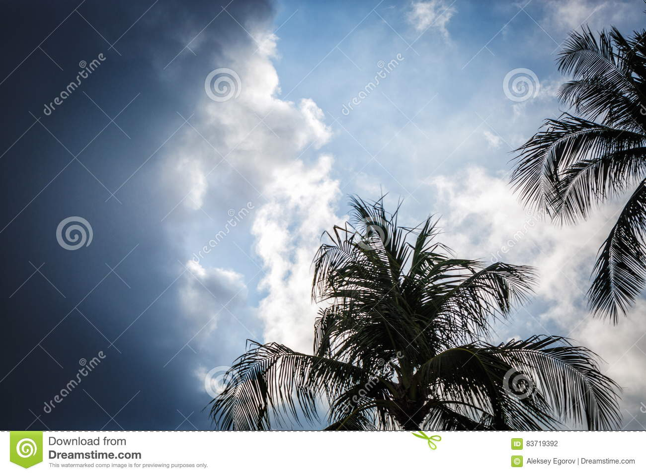 Palm Trees Against The Sky Stock Photo