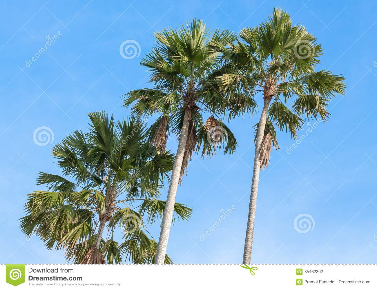 Palm trees on a background of blue sky.