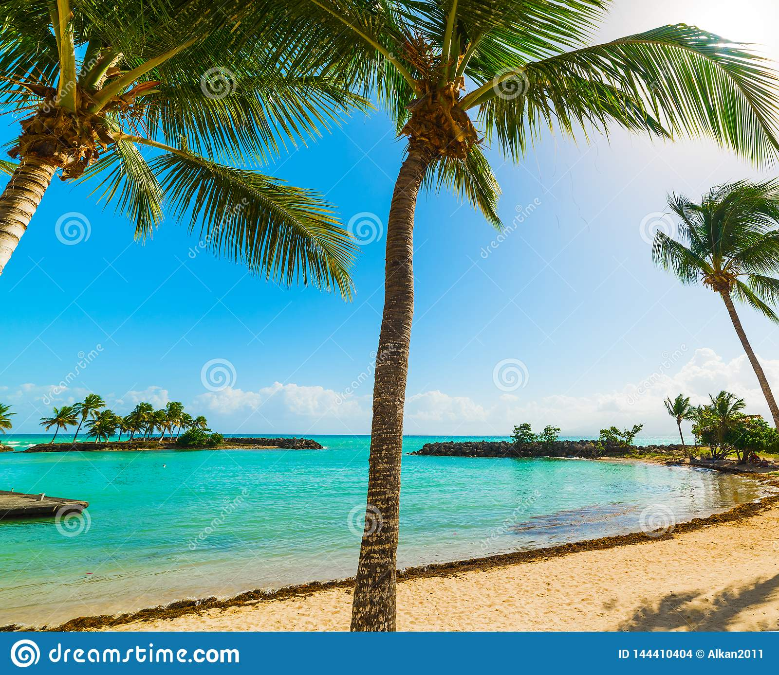 Guadeloupe Beach: Palm Trees In Bas Du Fort Beach In Guadeloupe Stock Photo