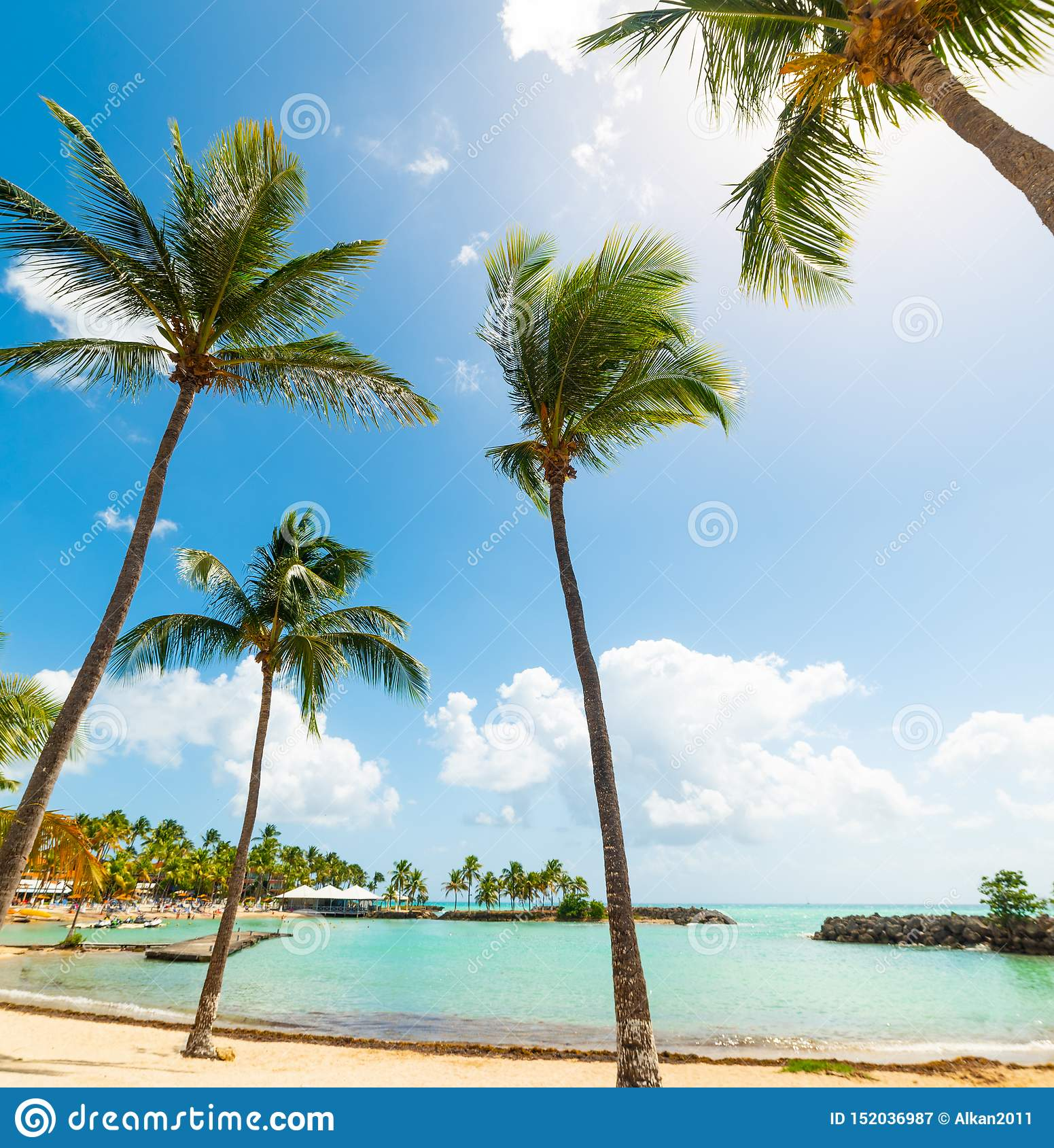 Guadeloupe Beach: Palm Trees In Bas Du Fort Beach In Guadeloupe Stock Image