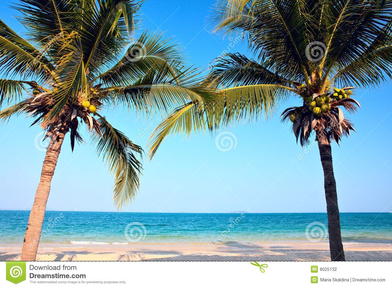 Palm Trees On The Beach: Palm Trees On The Beach Stock Photography