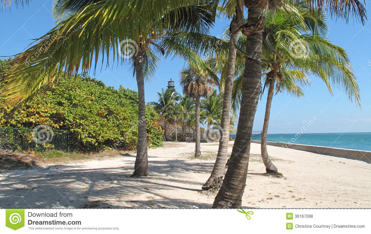 Palm Trees Stock Photo Image Of Bushes Beach Ocean