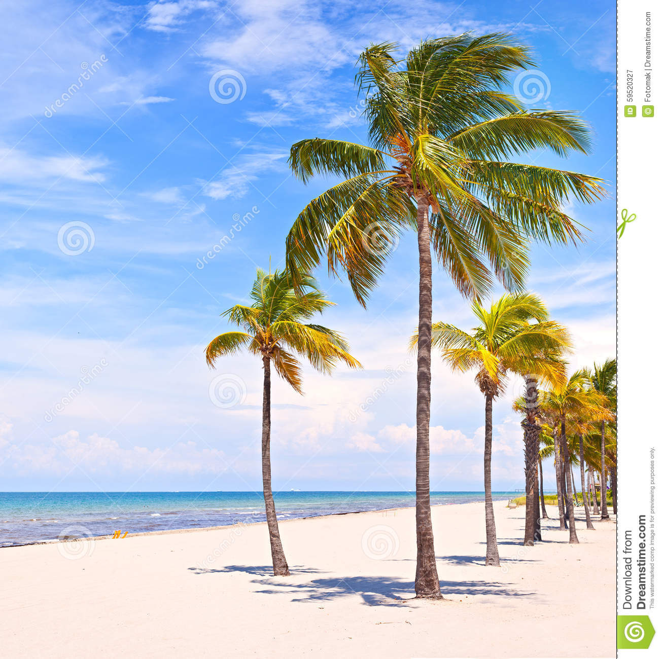 Palm Tree Beach: Palm Trees On A Beautiful Sunny Summer Afternoon Stock