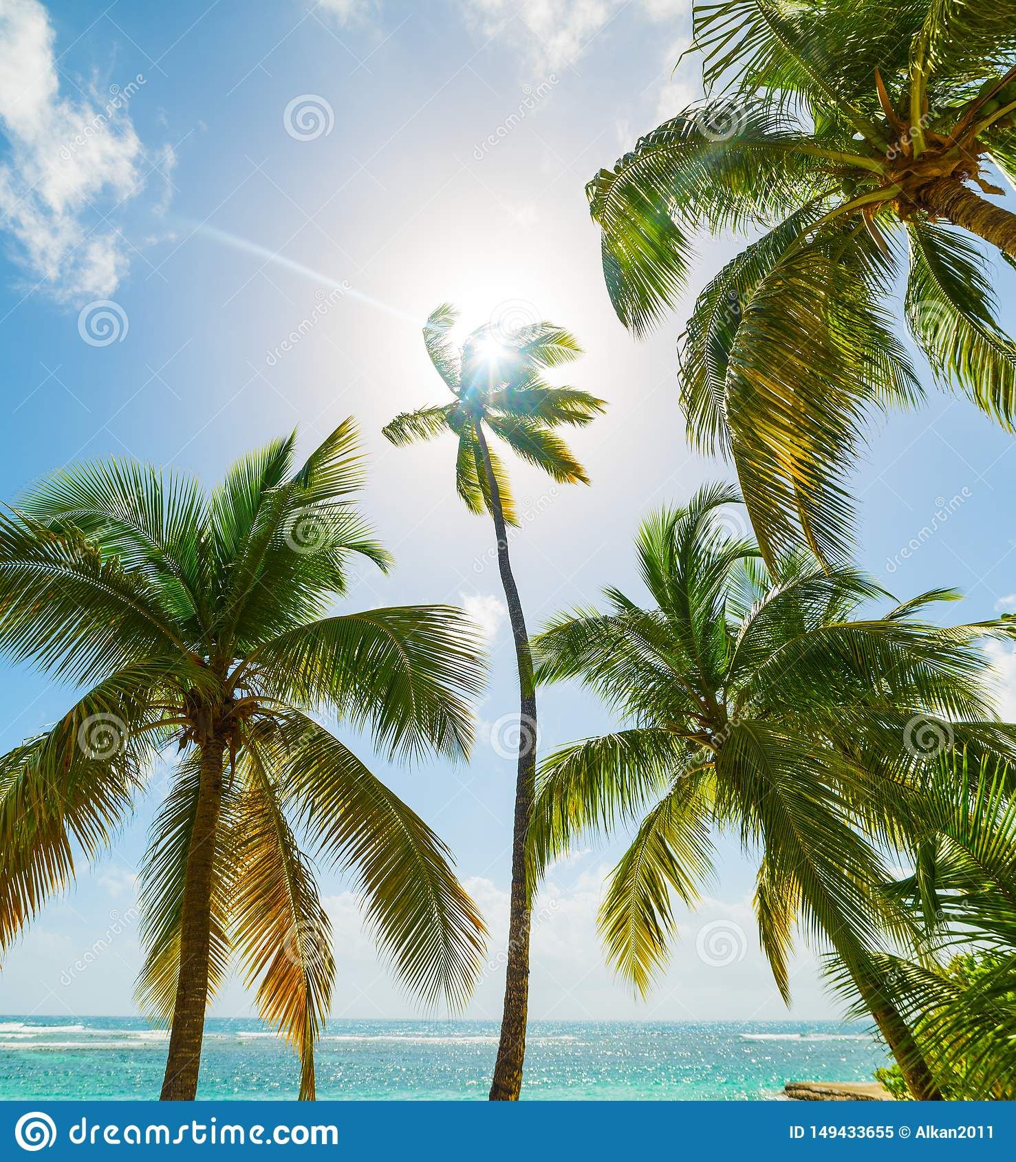 Guadeloupe Beach: Palm Trees And Blue Sea In La Caravelle Beach In