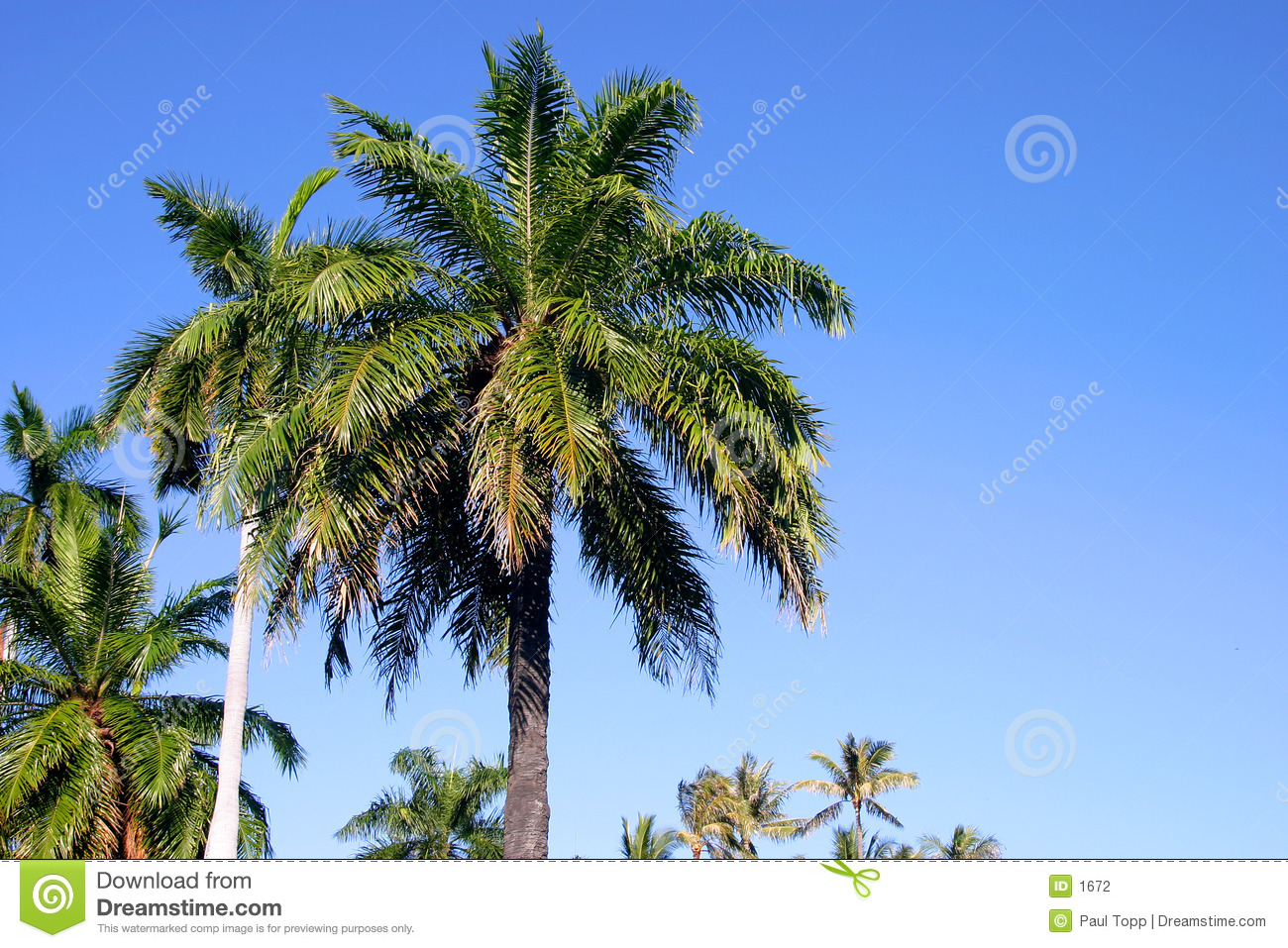 Palm Trees and Blue Sky in Hawaii