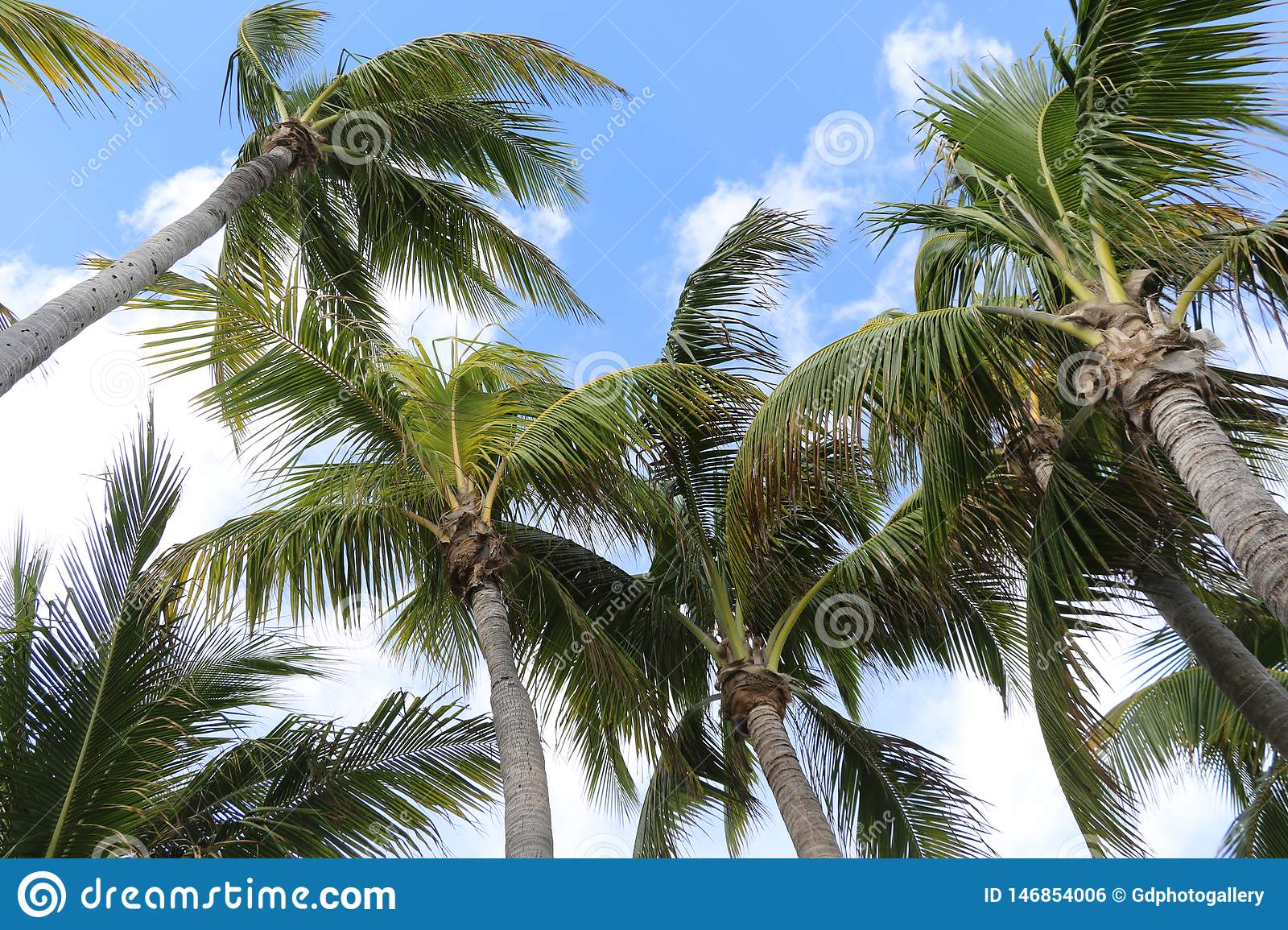 Palm trees on blue and white sky