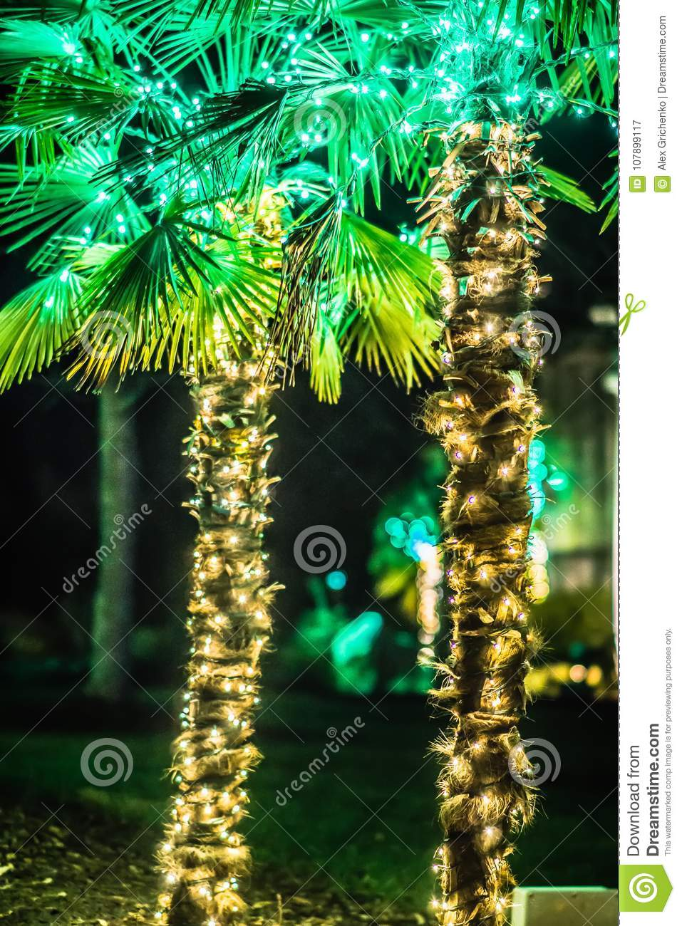 Palm Trees Decorated With Christmas Lights In Gardens Stock Image