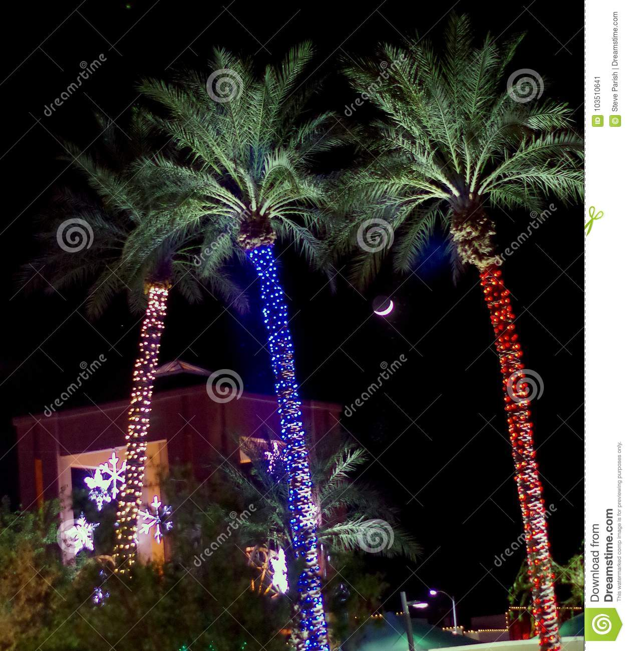 download palm trees with decorative lights christmas in arizona usa stock image image
