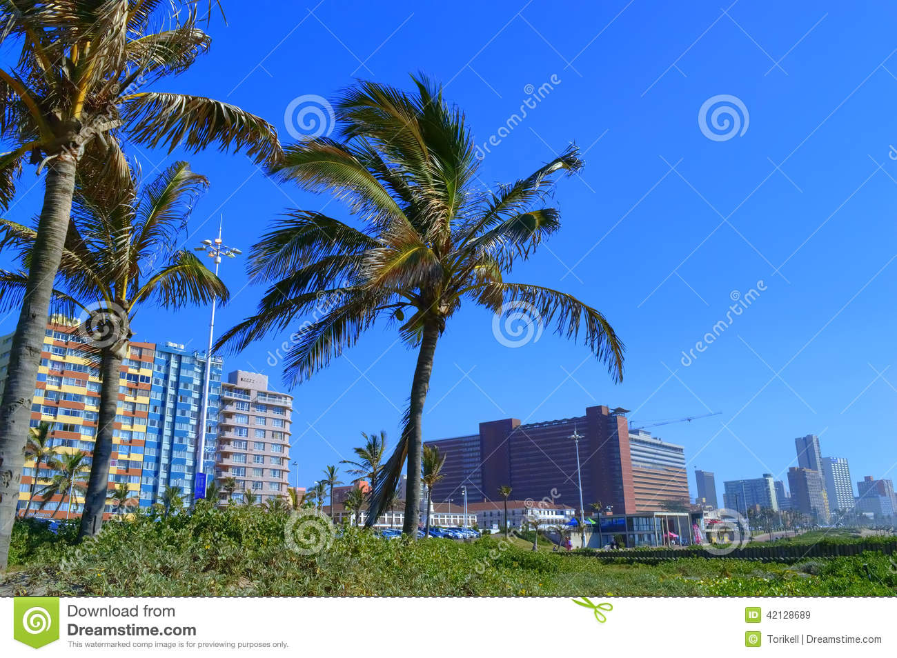 palm-trees-durban-sea-front-south-africa