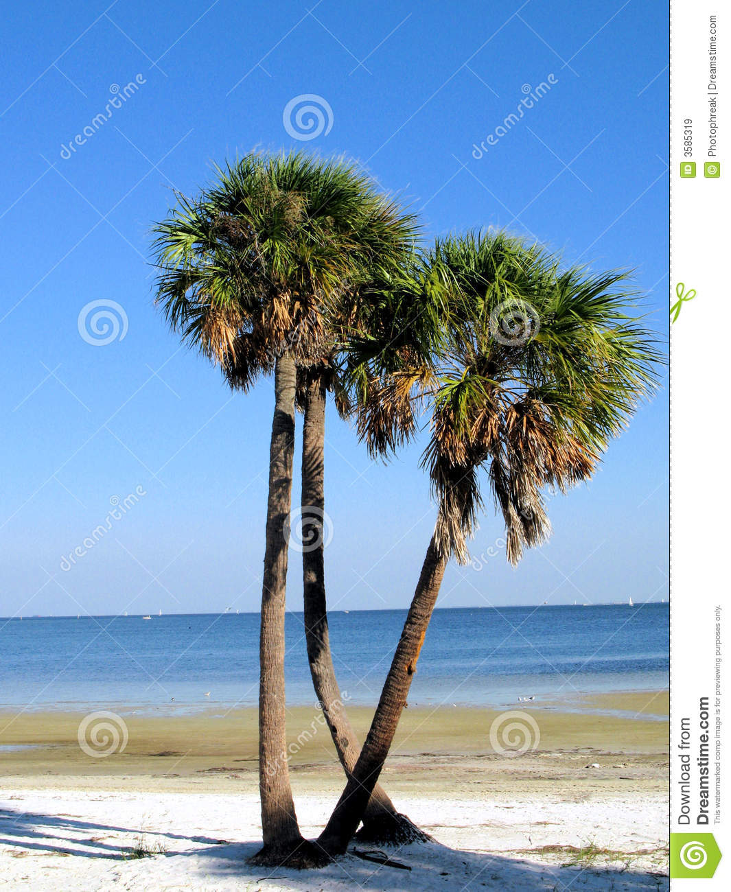 Palm Tree Beach: Palm Trees On Florida Beach Royalty Free Stock Images
