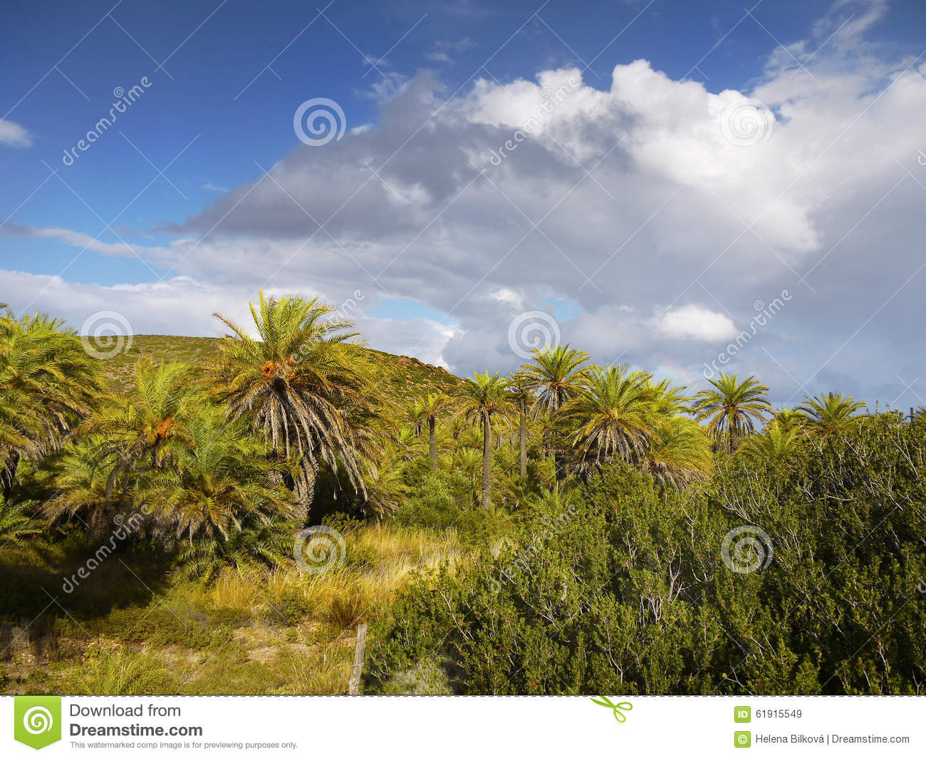 Make Your Home Beautiful Cretan Date Palm Trees On Vai Beach Greece Royalty Free