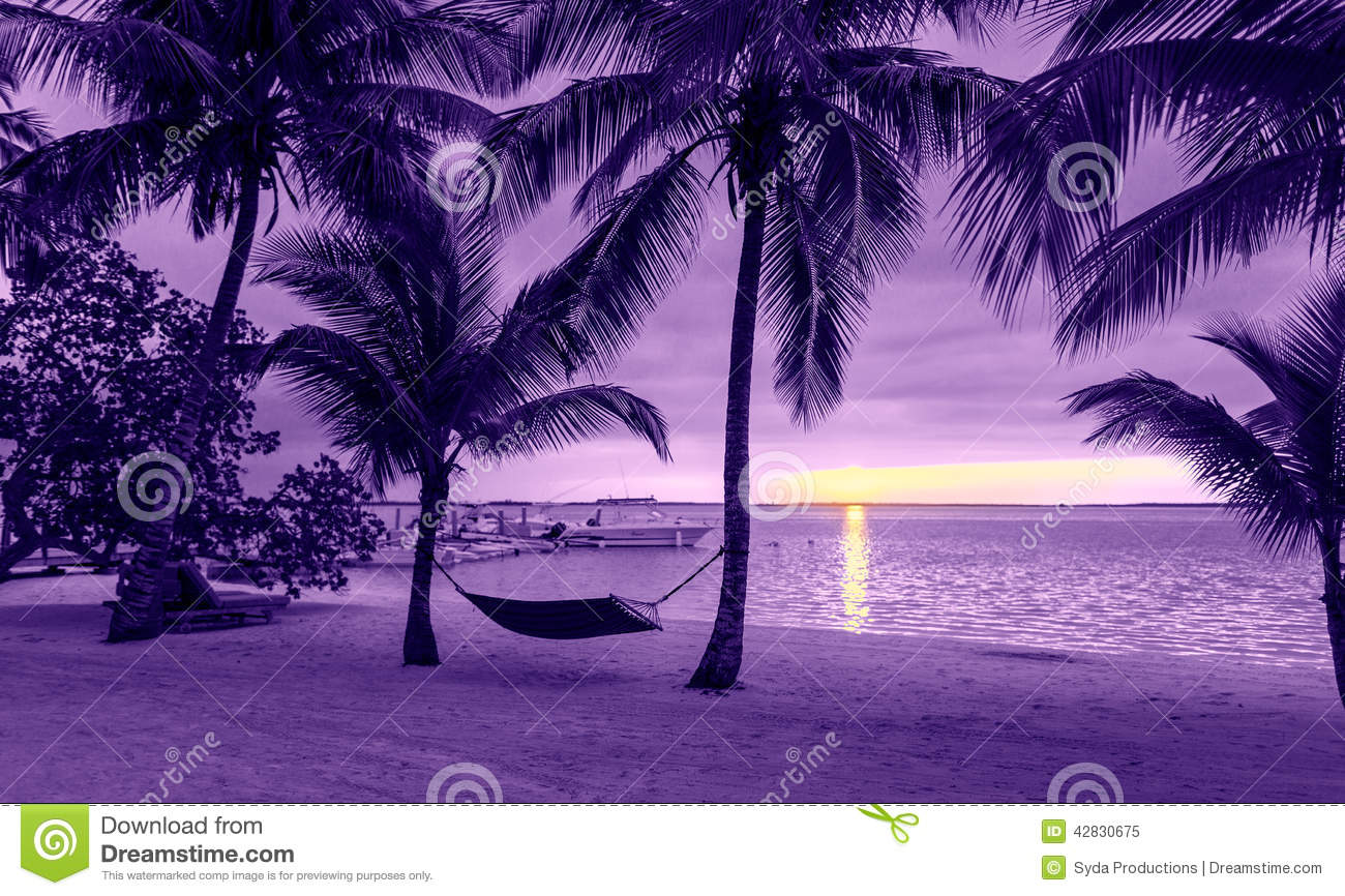 Palm Trees And Hammock On Tropical Beach Stock Photo