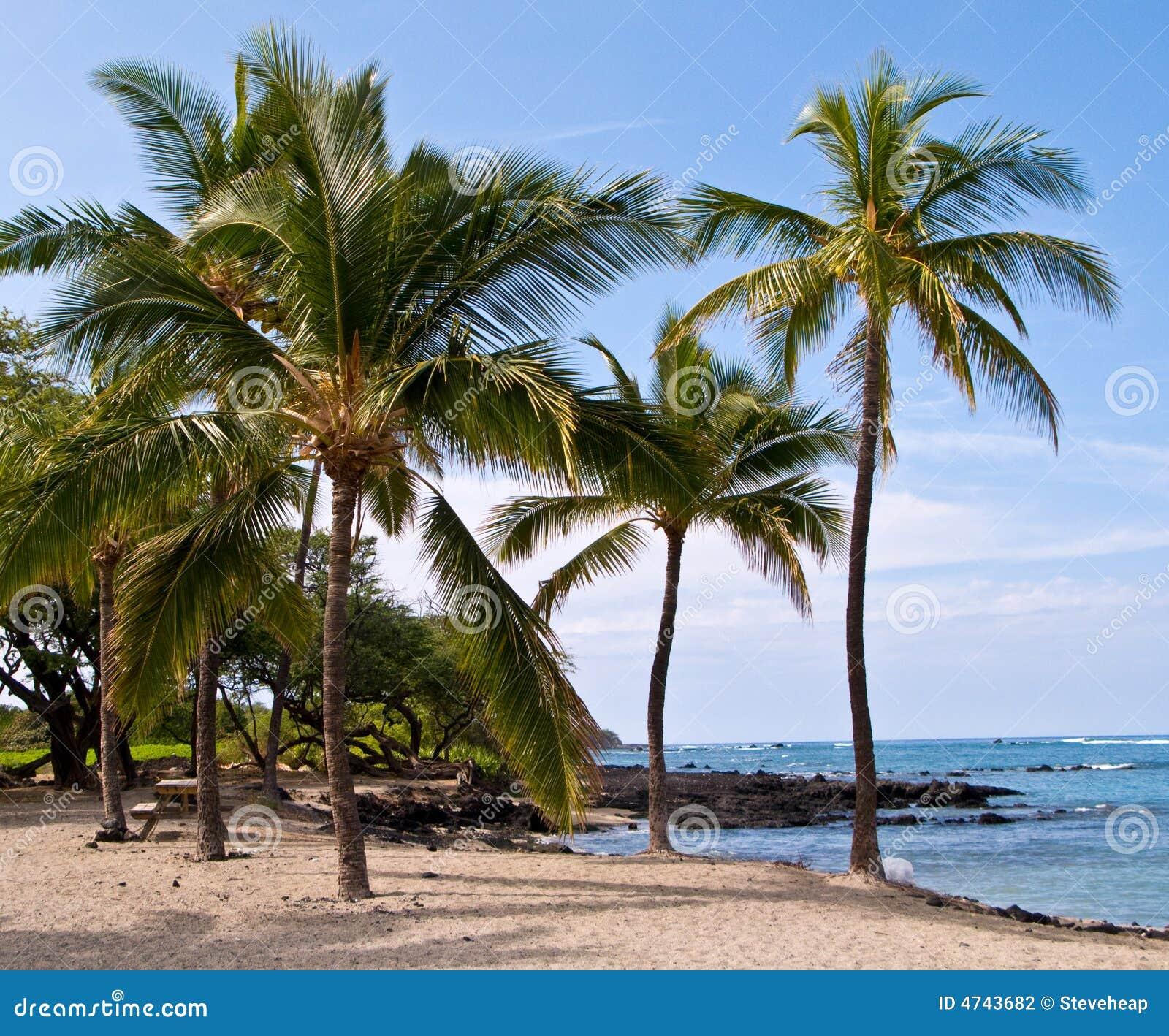 Palm trees on Hawaiian Beach