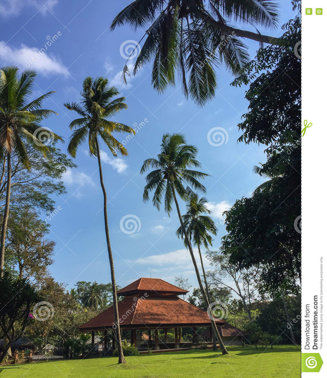 Palm Trees And House In Balinese Style Exotic Landscape