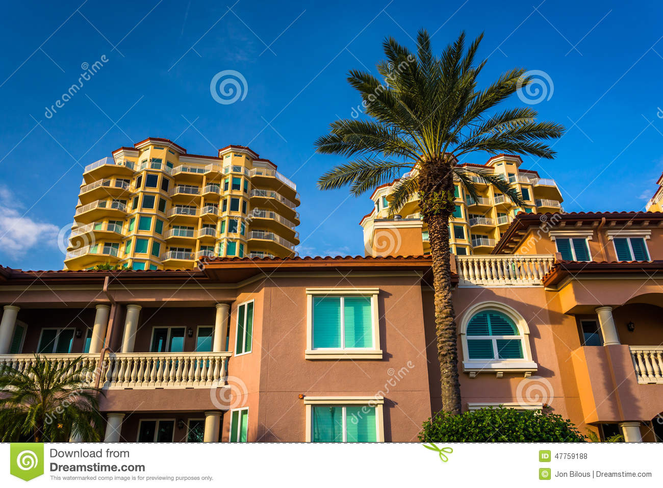 Palm trees, houses and condo towers in saint petersburg, florida