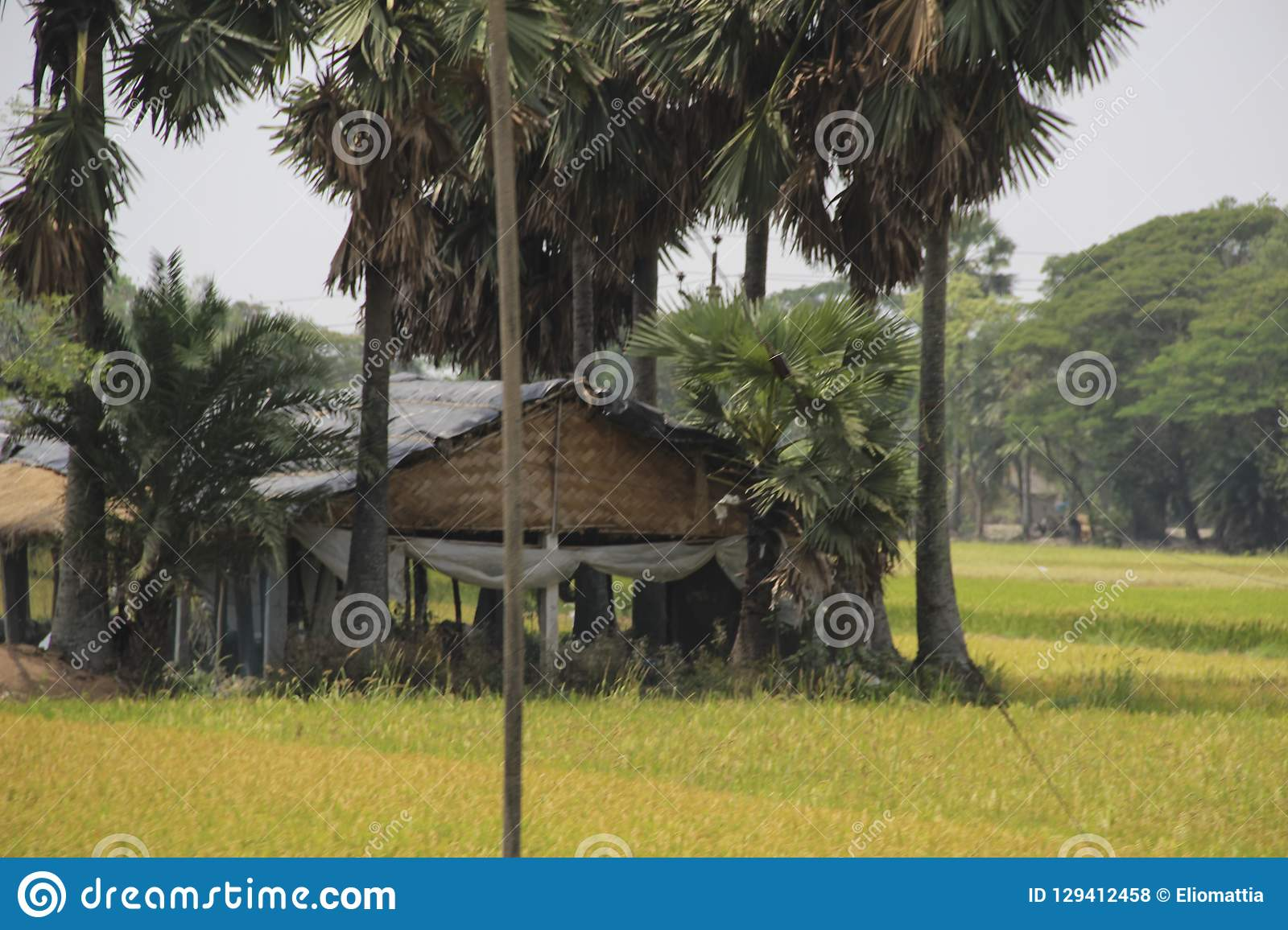 Palm trees and huts in Sundarbans national park, famous for Royal Bengal Tiger