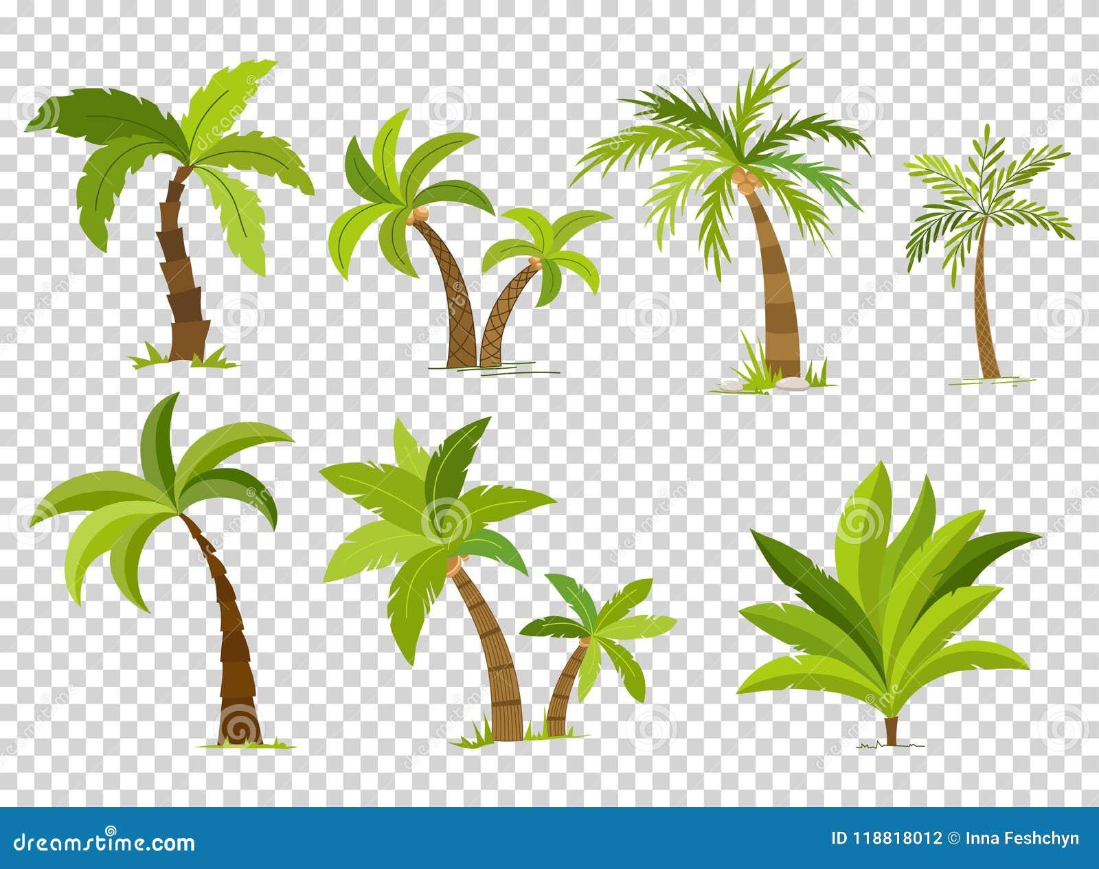 Palm trees isolated on transparent background. Beautiful vectro palma tree set vector illustration