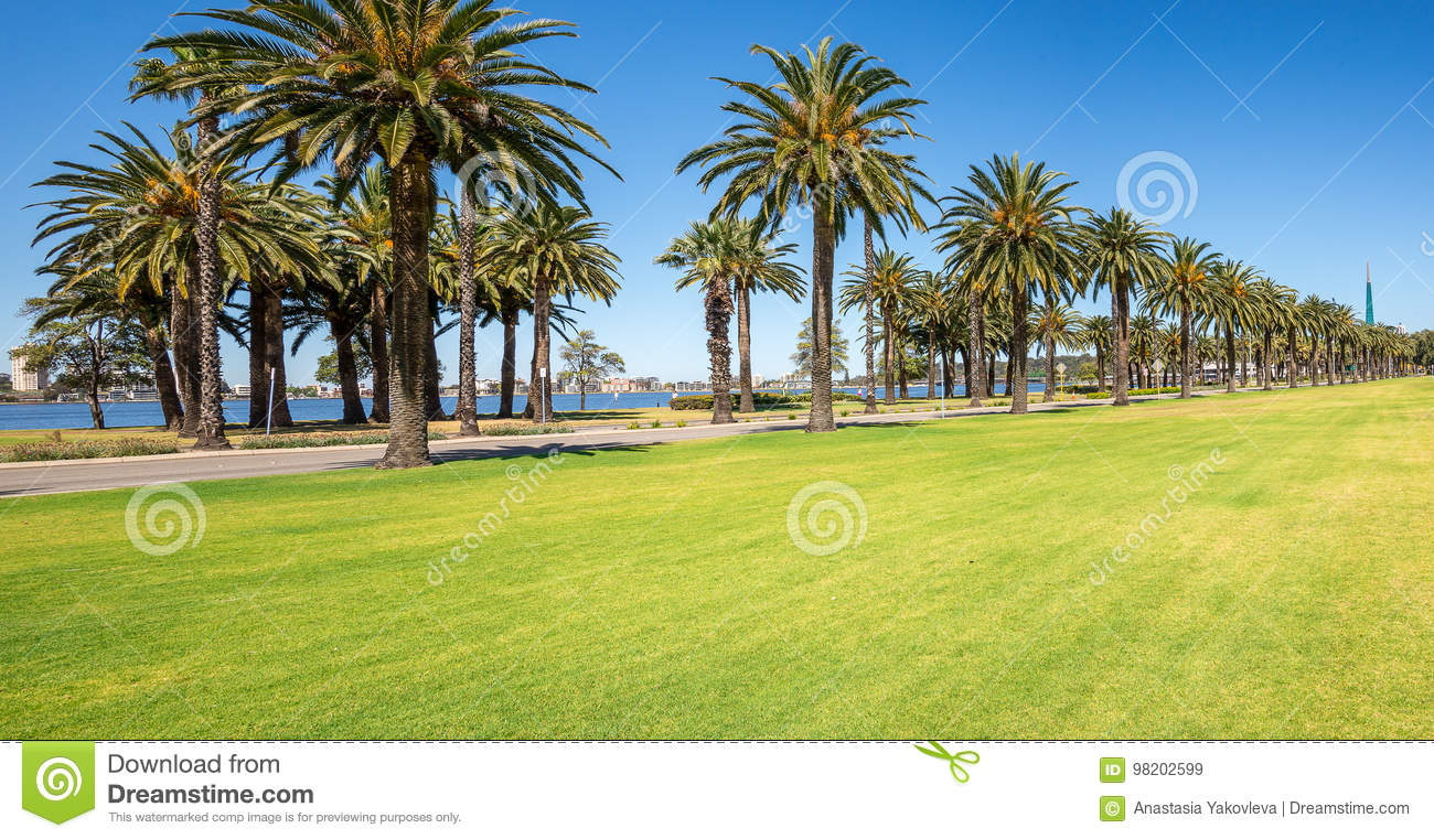Palm Trees In Langley Park Along Swan River In Perth City