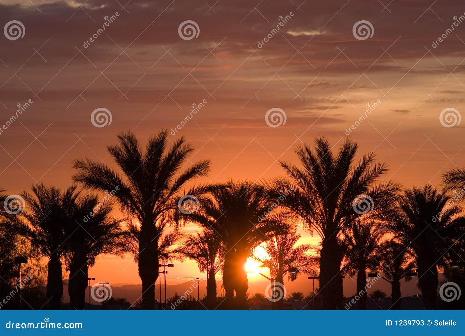 palm trees during las vegas sunrise stock image image 1239793. Black Bedroom Furniture Sets. Home Design Ideas