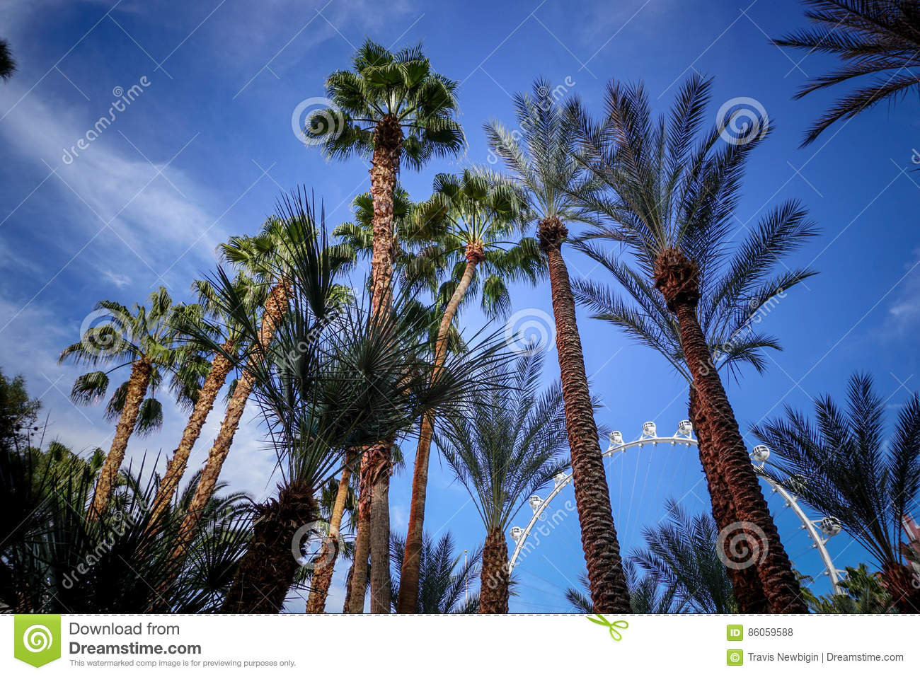 palm trees in las vegas stock photo image of palm famous 86059588