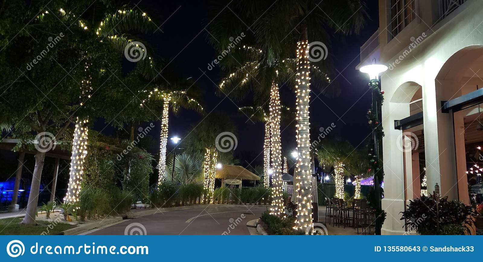 Christmas Lights In Palm Trees.Palm Trees Lit Up With Holiday Lights Stock Image Image Of