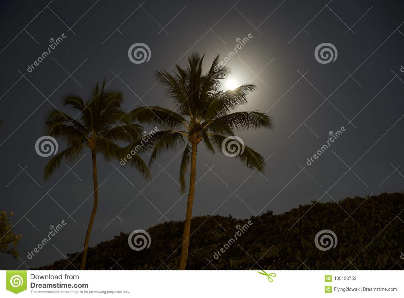 palm trees lit up by moon light stock image image of maui natural
