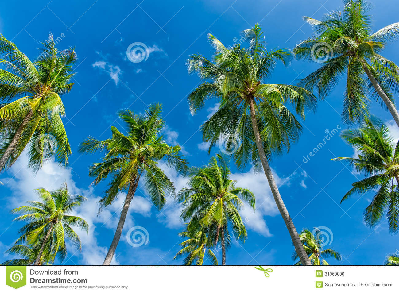 background of blue tropical - photo #18